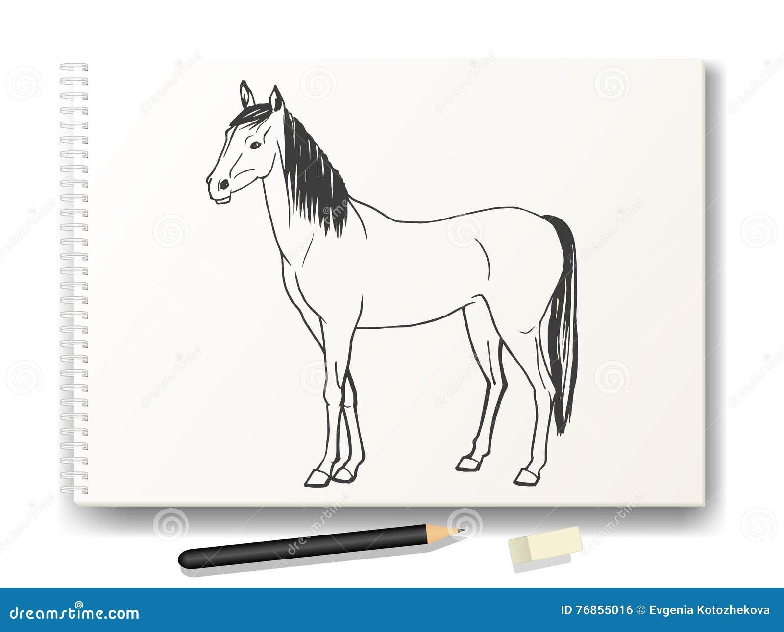 Pferd Eigenhändig Gezeichnet In Bleistift Auf Dem Album A4