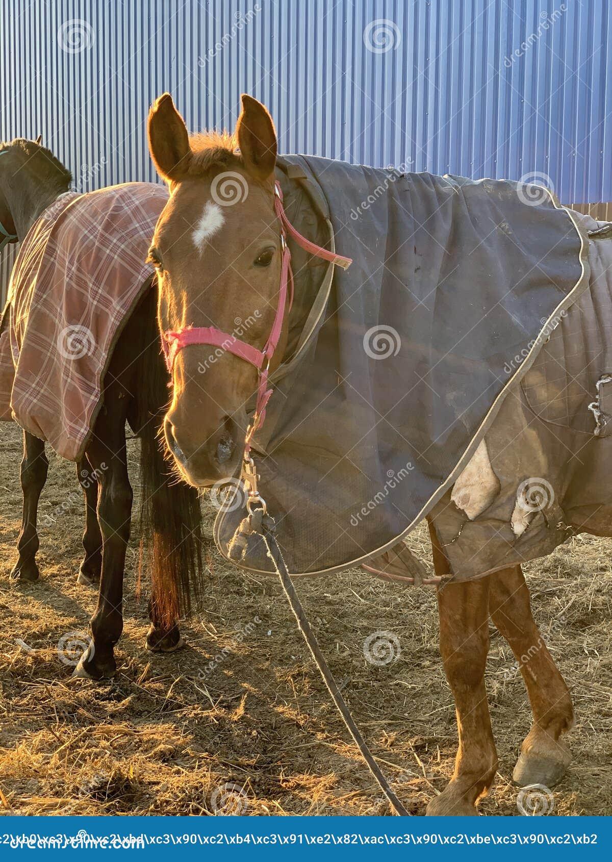 Pferd in einem Stall