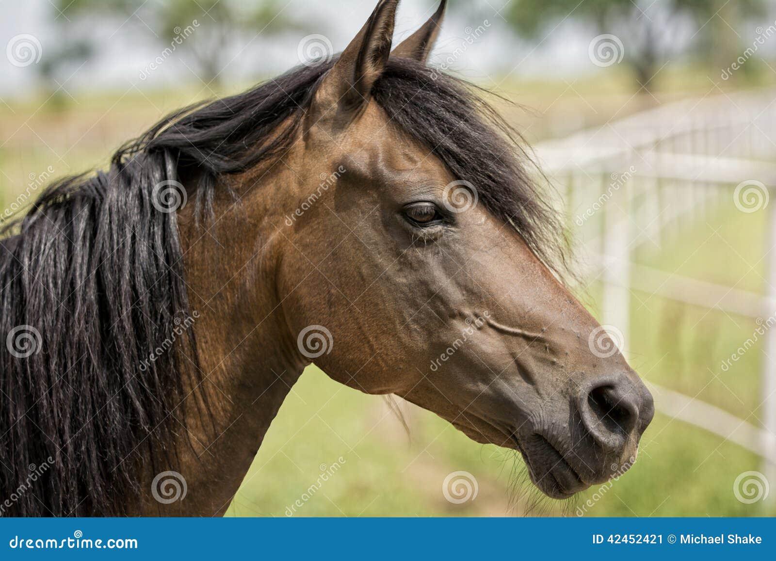 Pferd in einer Weide