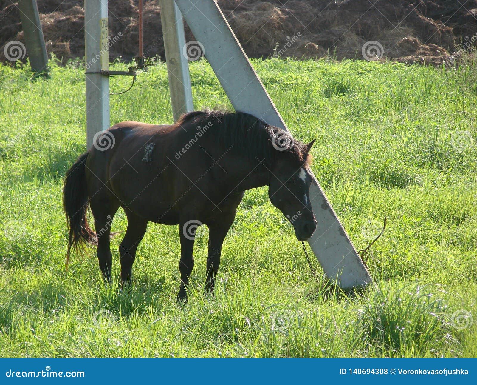 Pferd gebunden an einem Beitrag