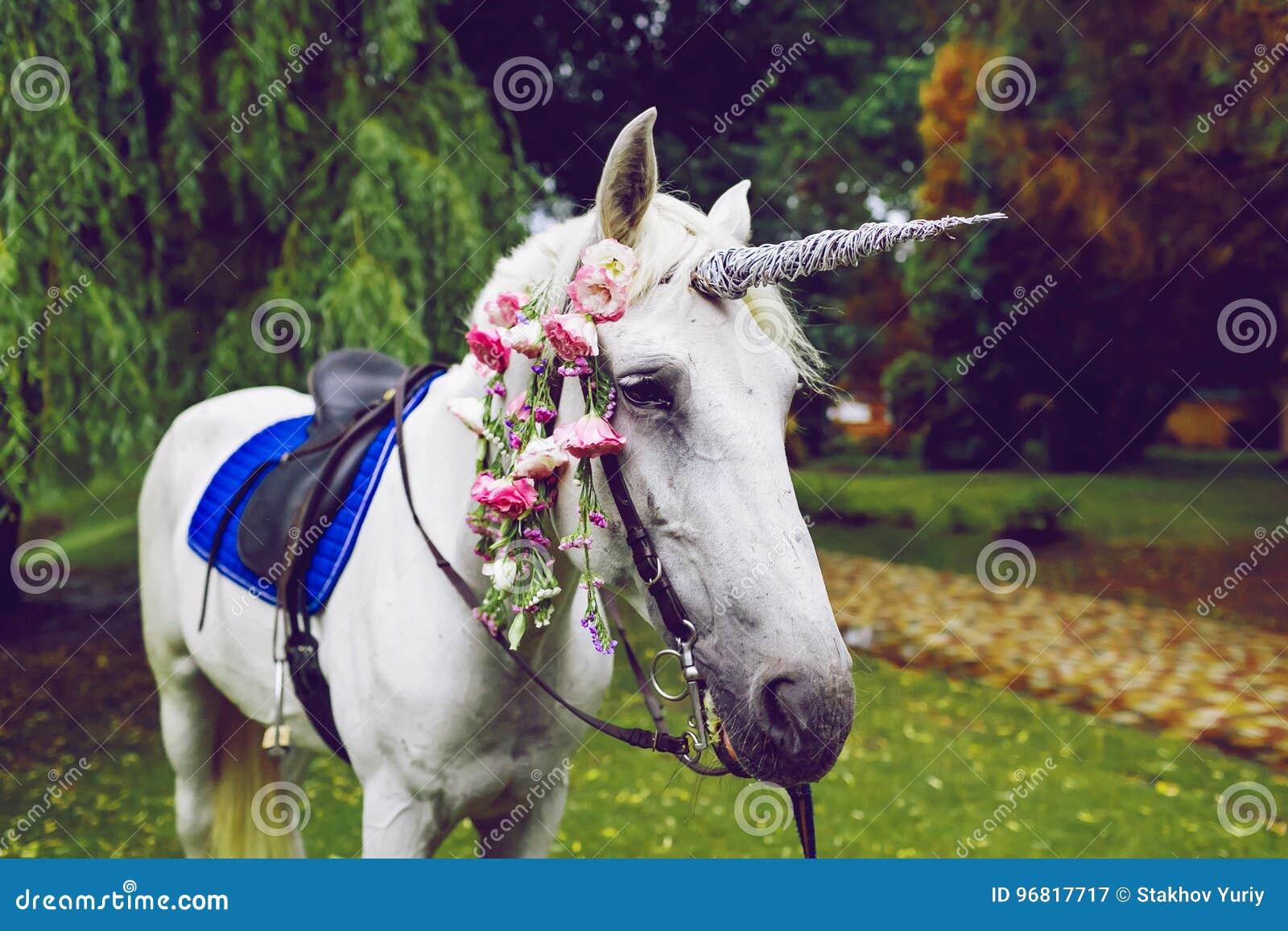 Pferd Gekleidet Als Einhorn Mit Dem Horn Ideen Für Photoshoot ...