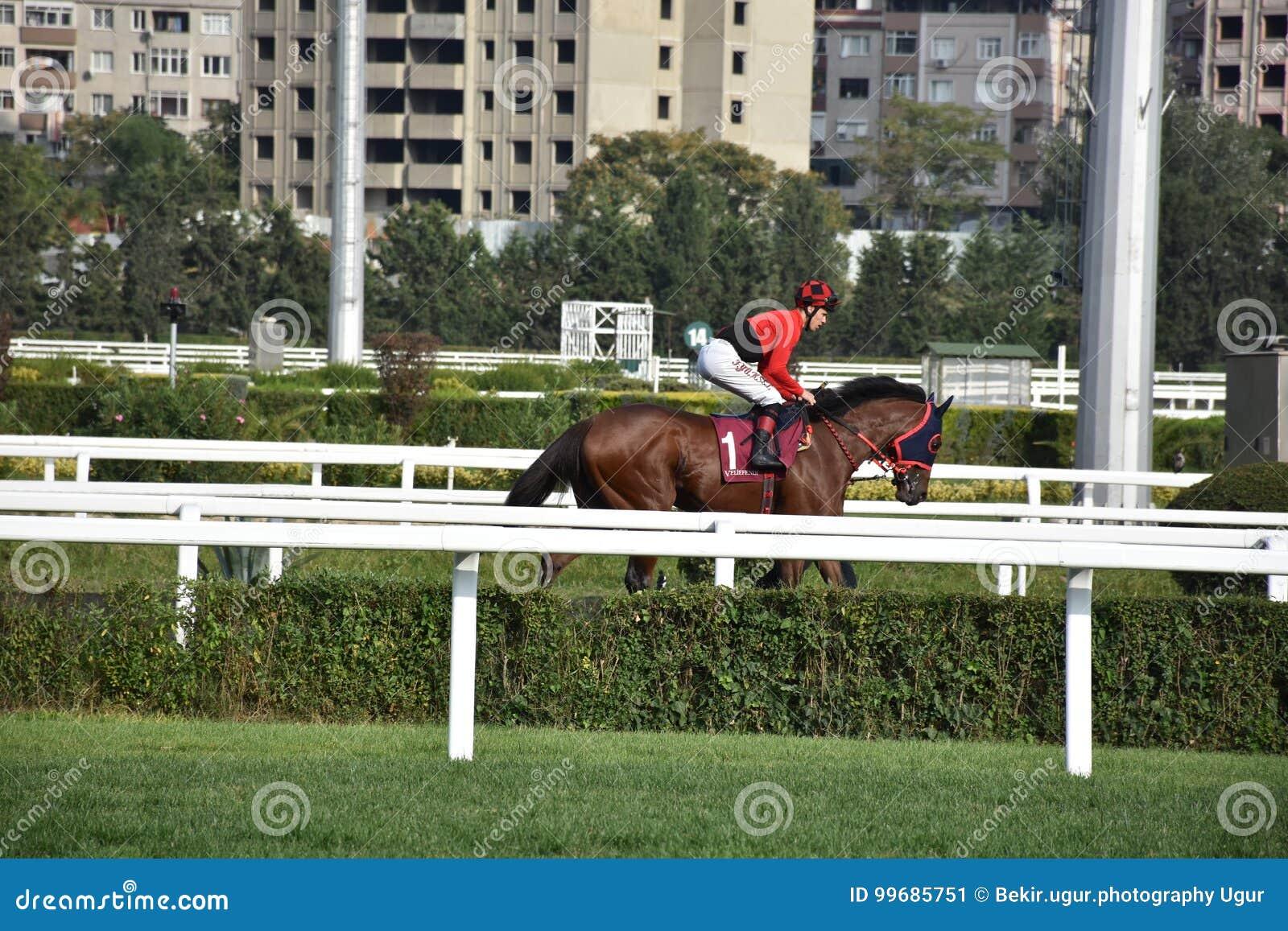 Pferd Racing