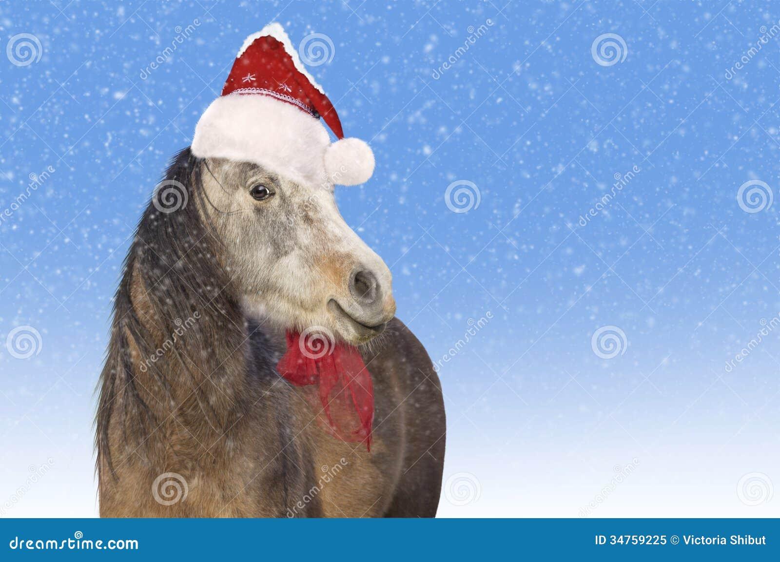 Pferd. Sankt- Nikolauskappe. Weihnachten Stockbild - Bild von blau ...