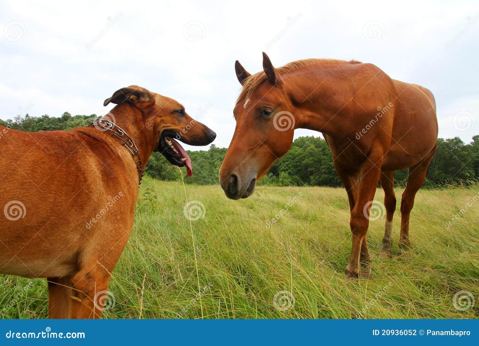 pferd und hund stockfoto bild von hund pferd  20936052