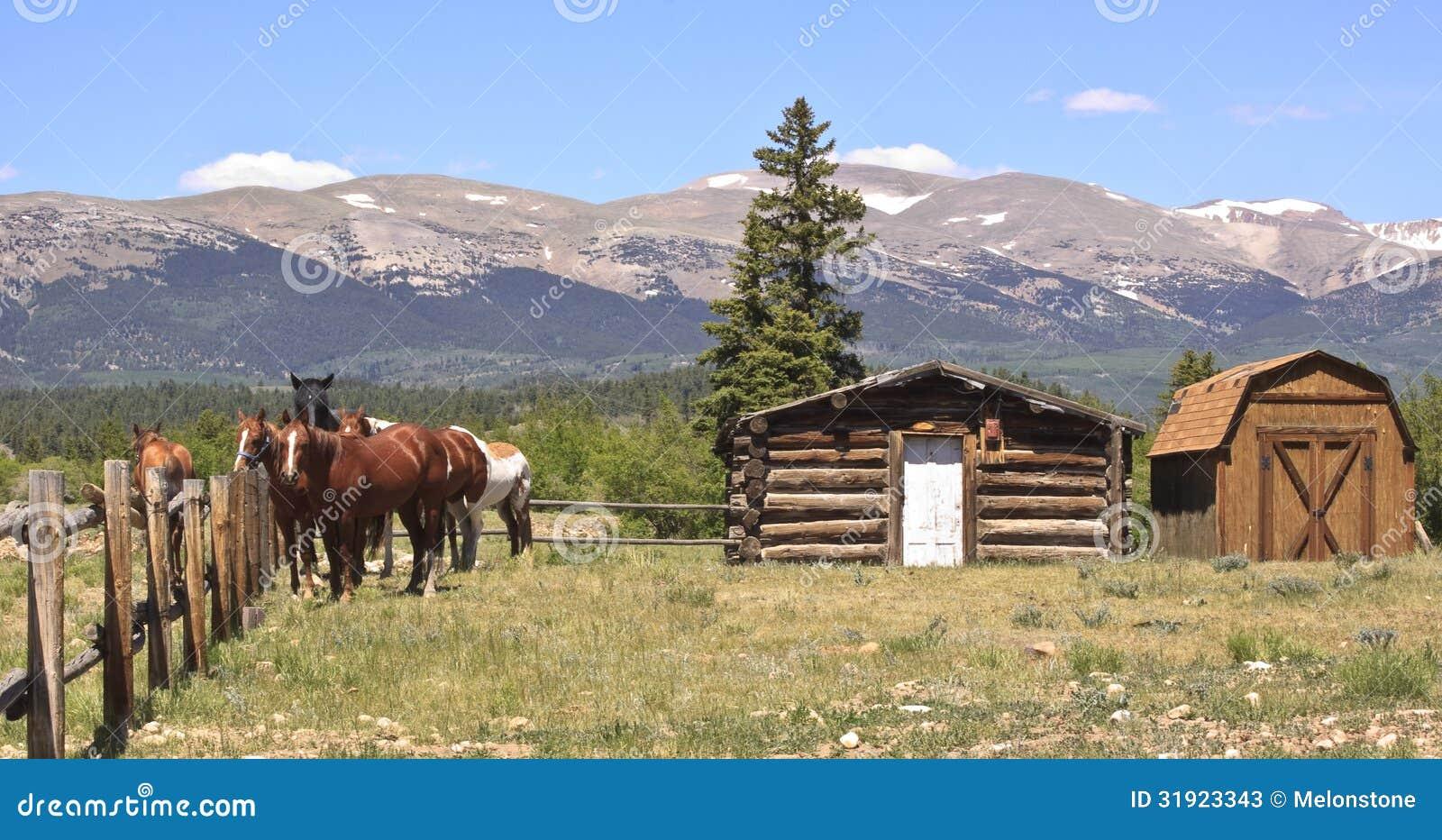 Pferde auf Ranch