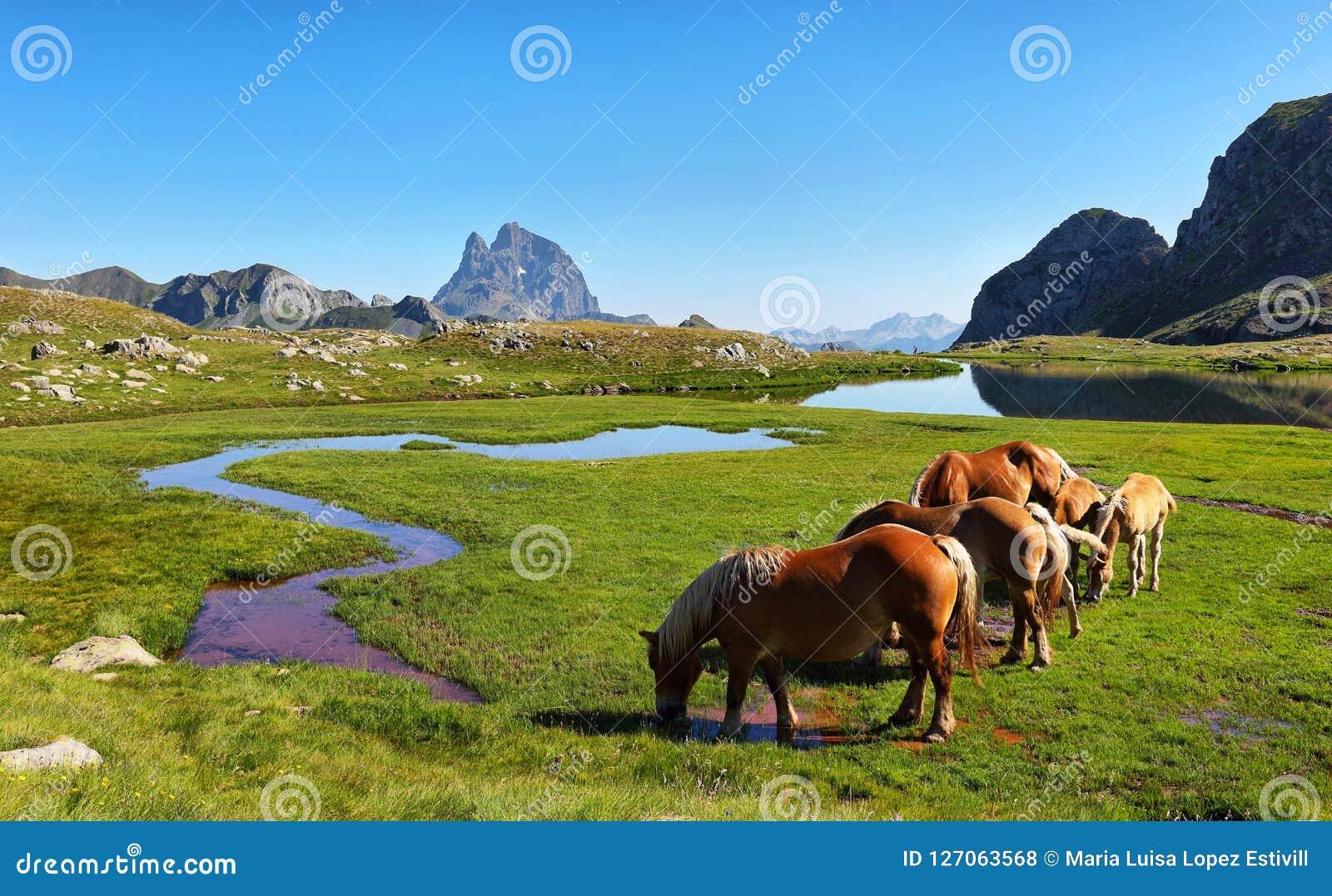 Pferde, die in Anayet-Hochebene, Spanisch Pyrenäen, Aragonien, Spanien weiden lassen
