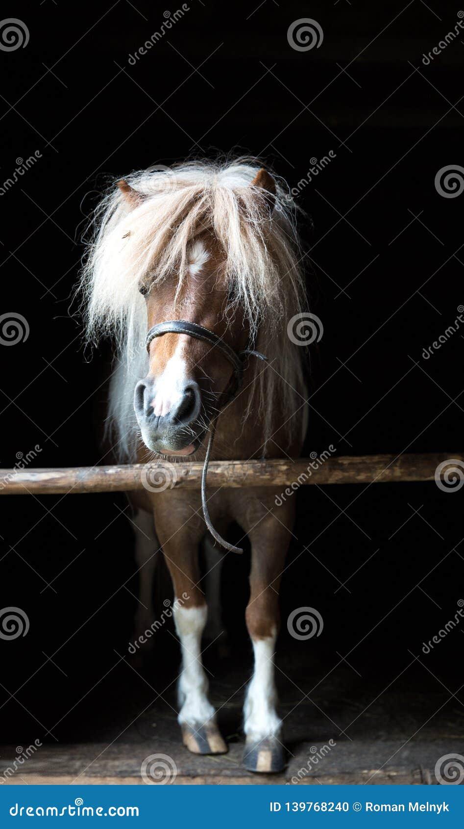 Pferde, die Kamera untersuchen