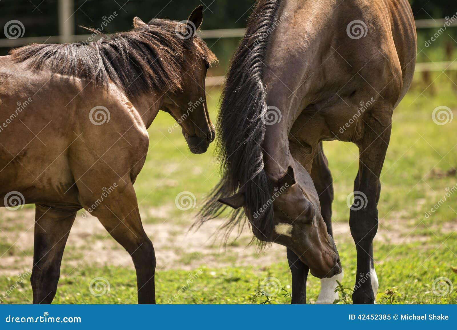 Pferde in einer Weide