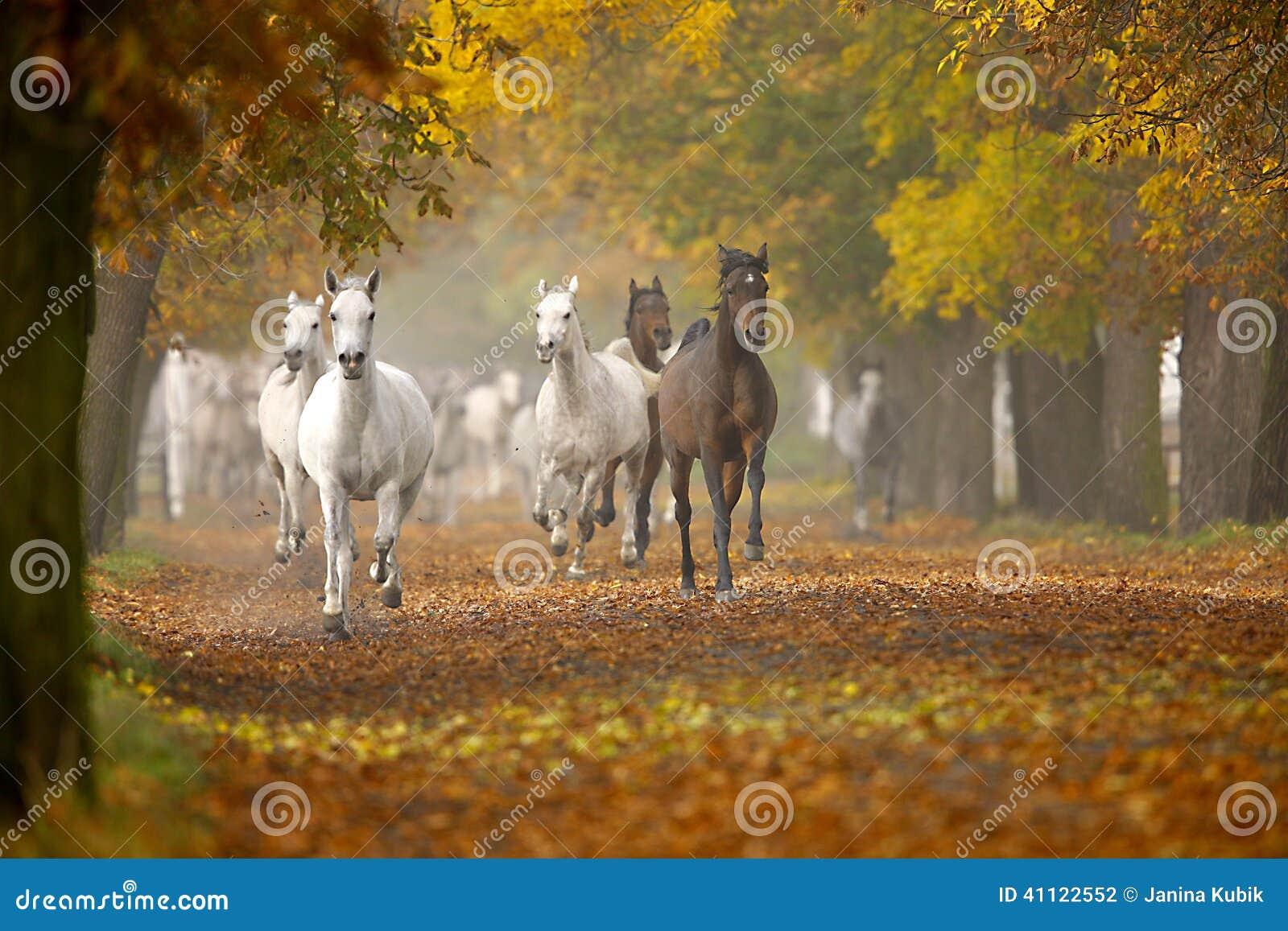 Pferde im Herbst