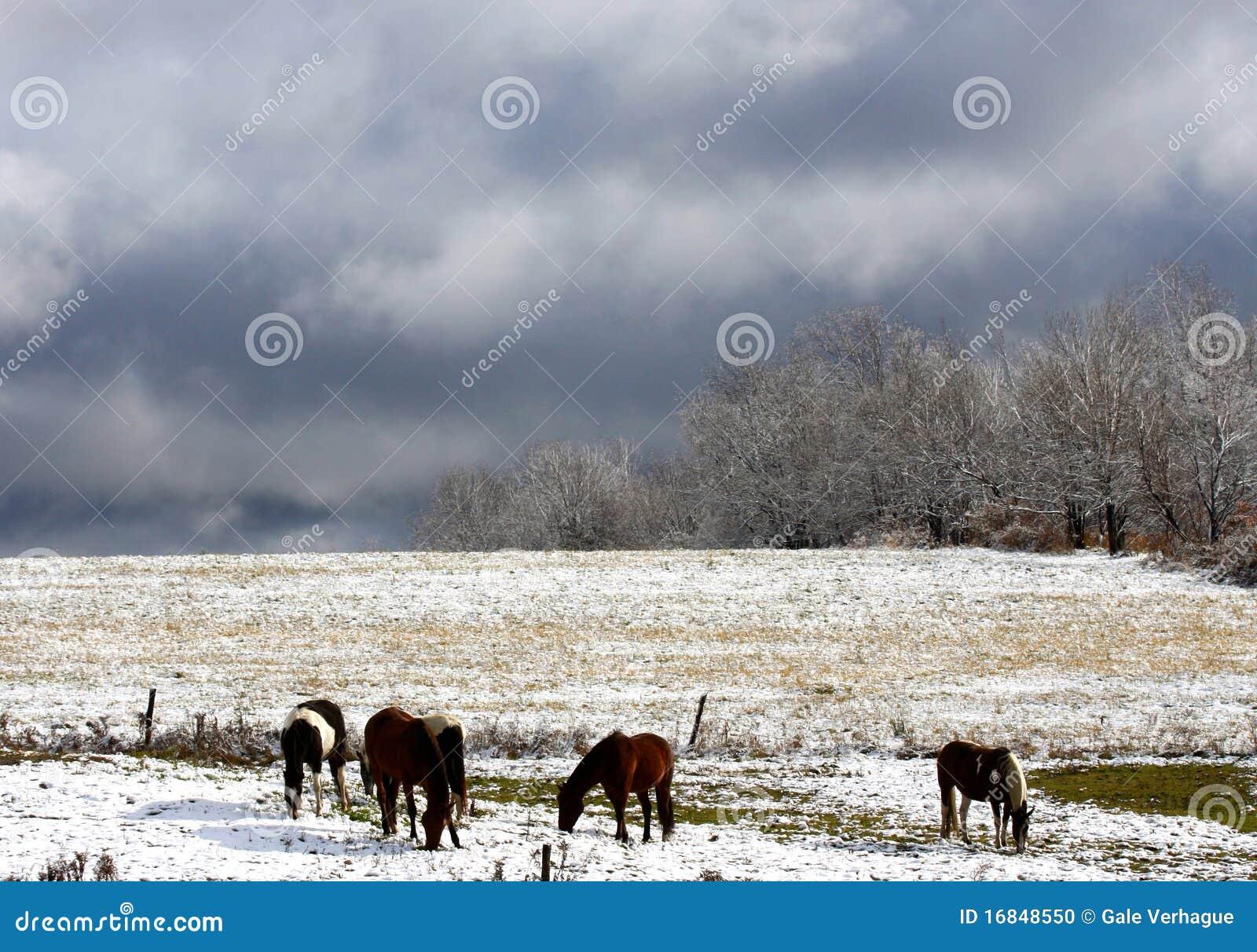 Pferde im Herbst-Schnee