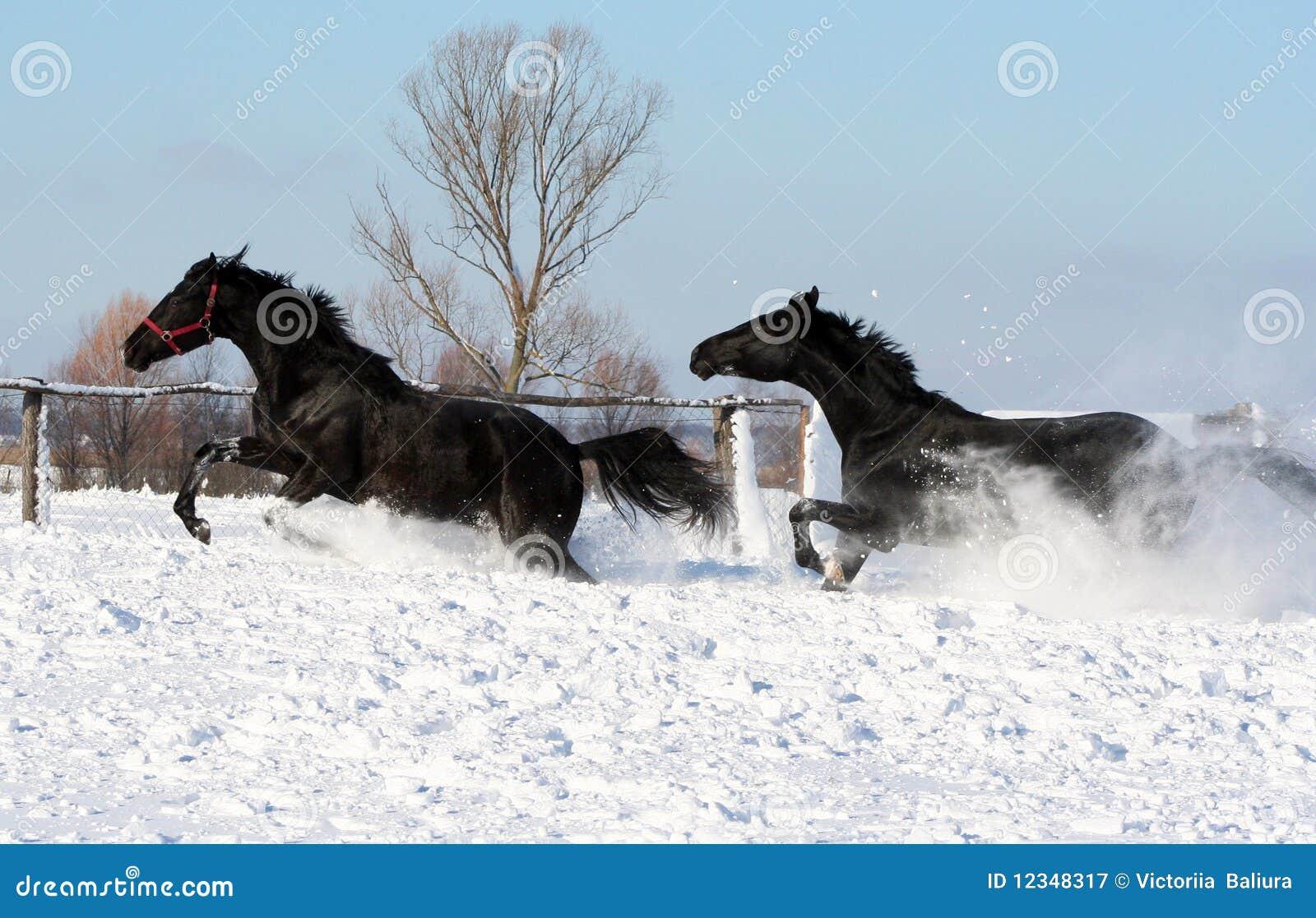 pferde im schnee stockbild bild von zwei schnee vortrefflich 12348317. Black Bedroom Furniture Sets. Home Design Ideas