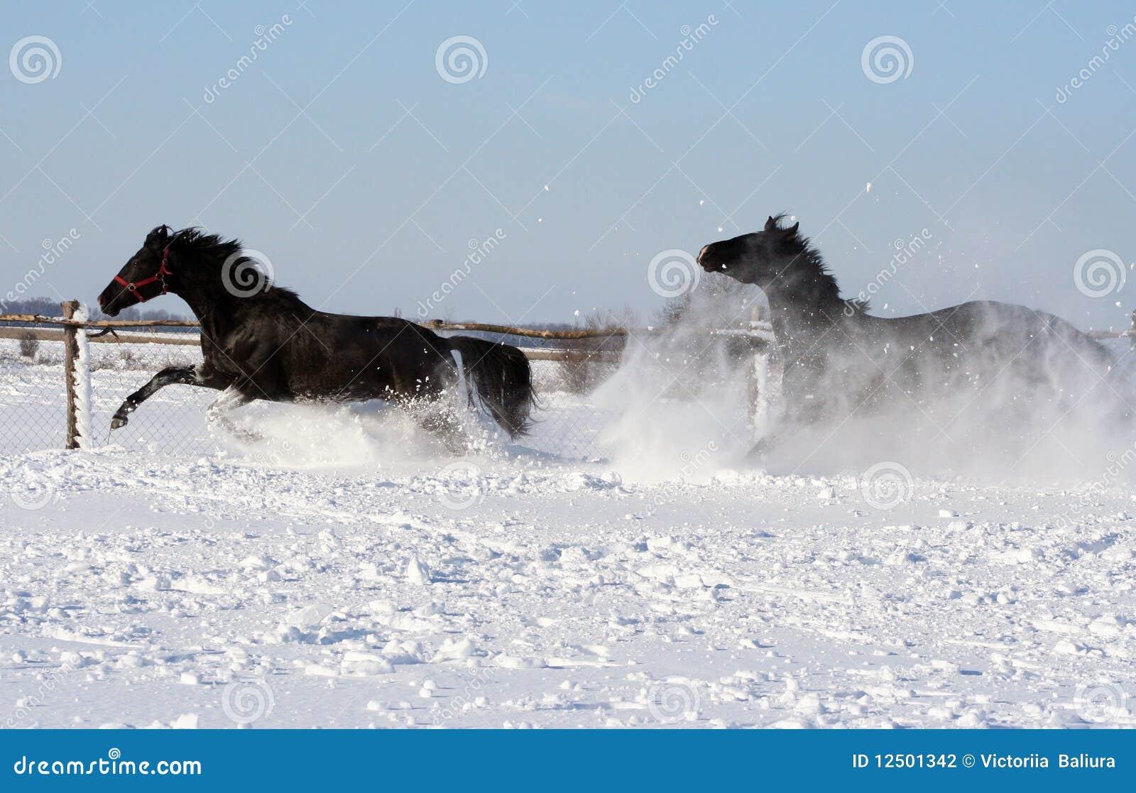 pferde im schnee stockfoto bild von paar freiheit blau. Black Bedroom Furniture Sets. Home Design Ideas