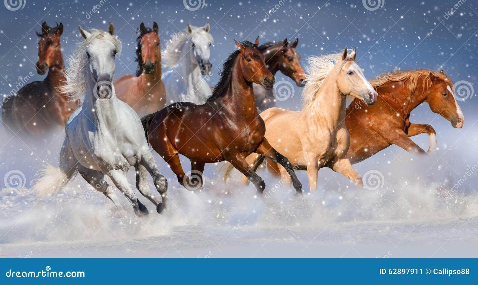 pferde im schnee stockbild bild von himmel thoroughbred. Black Bedroom Furniture Sets. Home Design Ideas