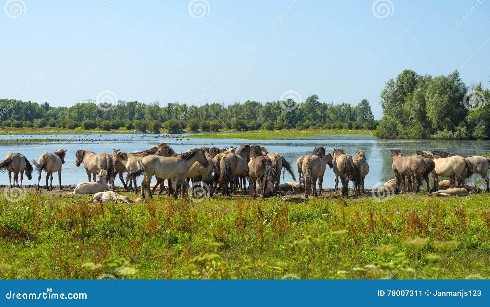 Pferde im Sumpfgebiet im Sommer