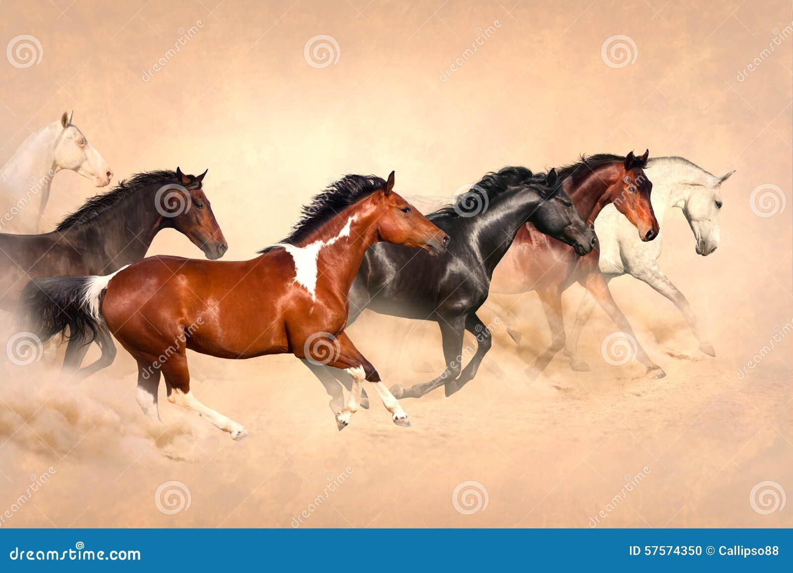 Pferdeherde in der Wüste