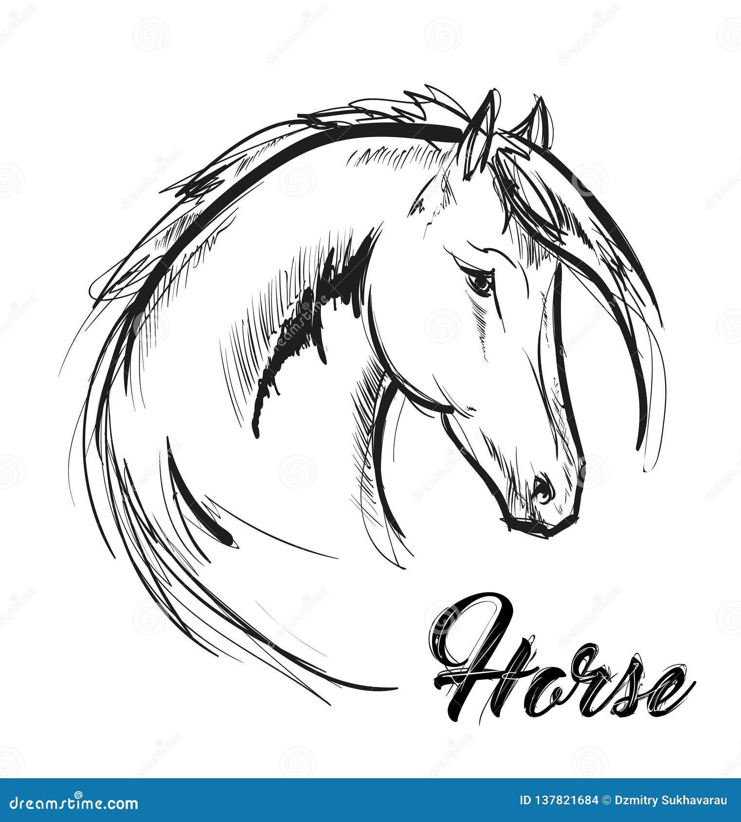 Pferdekopfprofil-Skizzenvektorgrafik Hand gezeichnete Abbildung