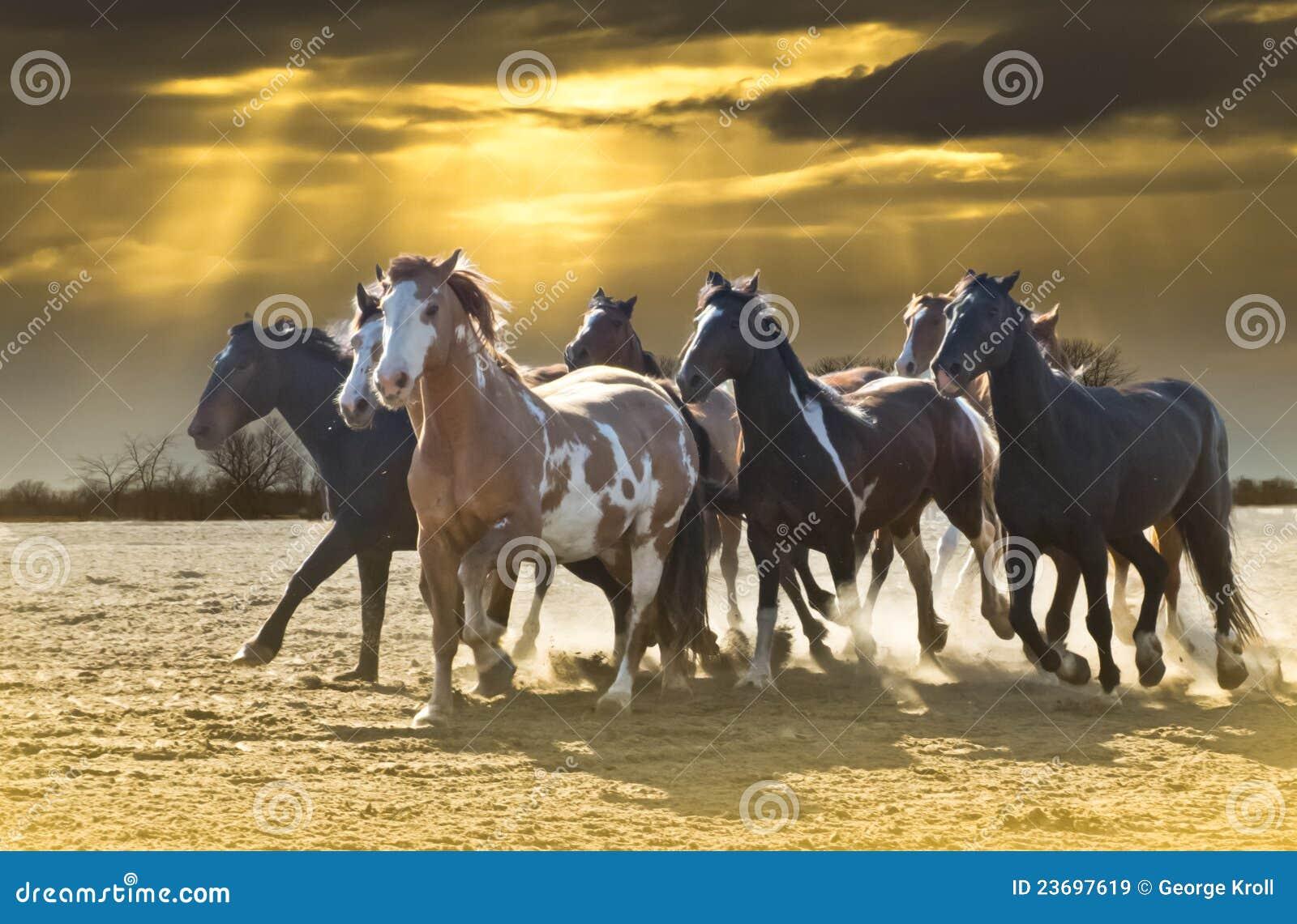 Pferden-Ansturm gegen schönen Himmel