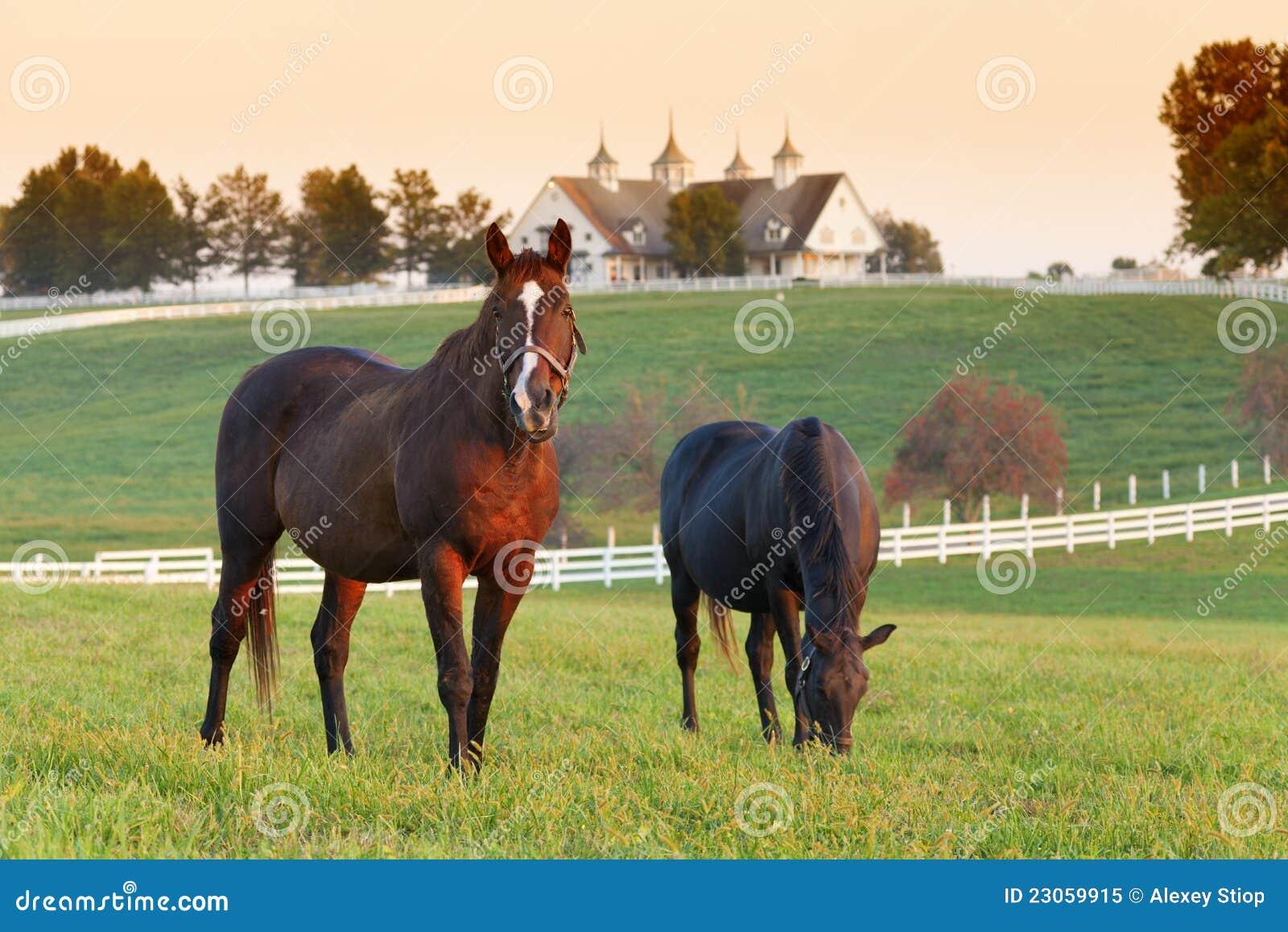 pferdenbauernhof stockbild bild von bauernhof wiese