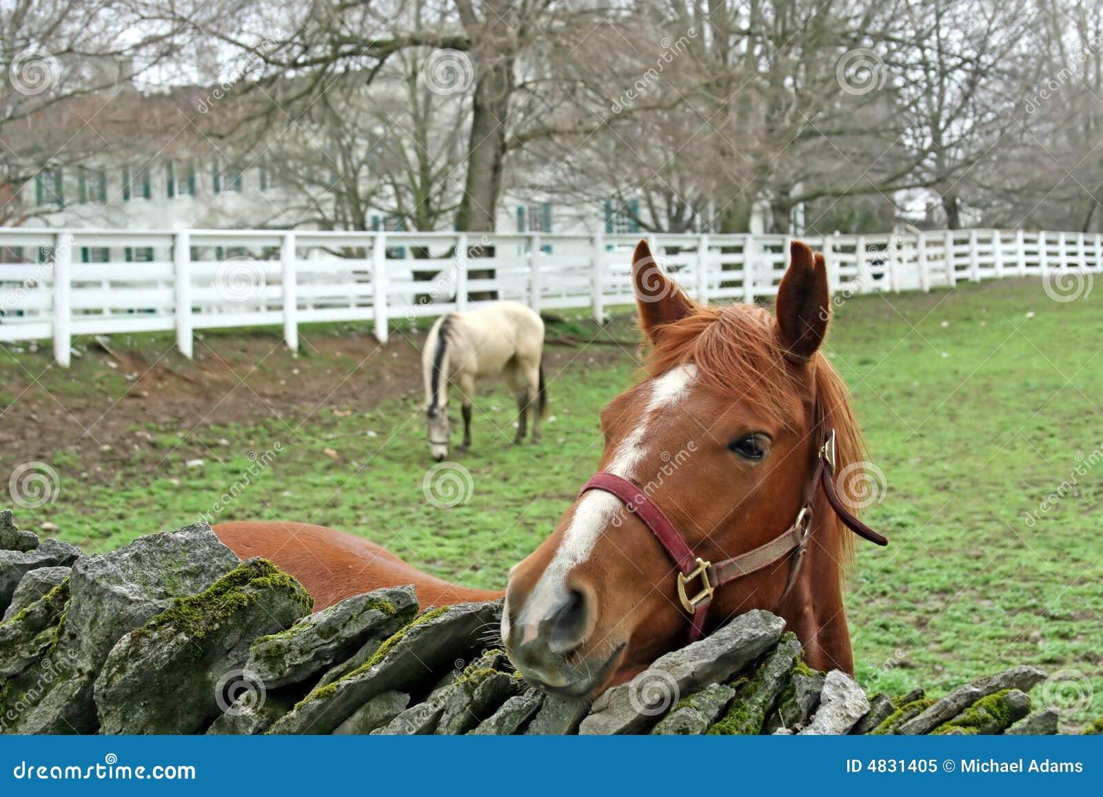 Pferden-Bauernhof