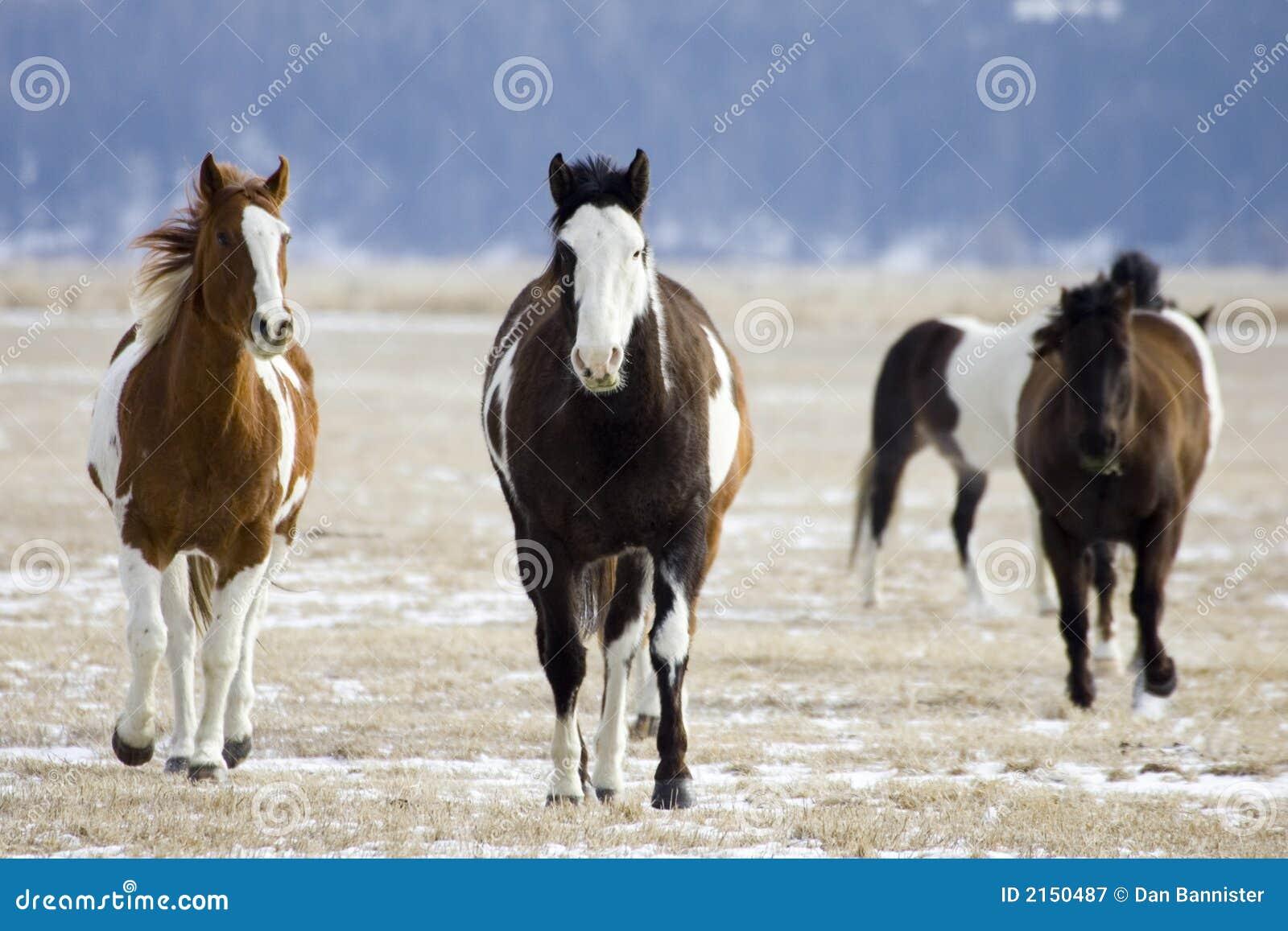 Pferden-Zusammenfassung