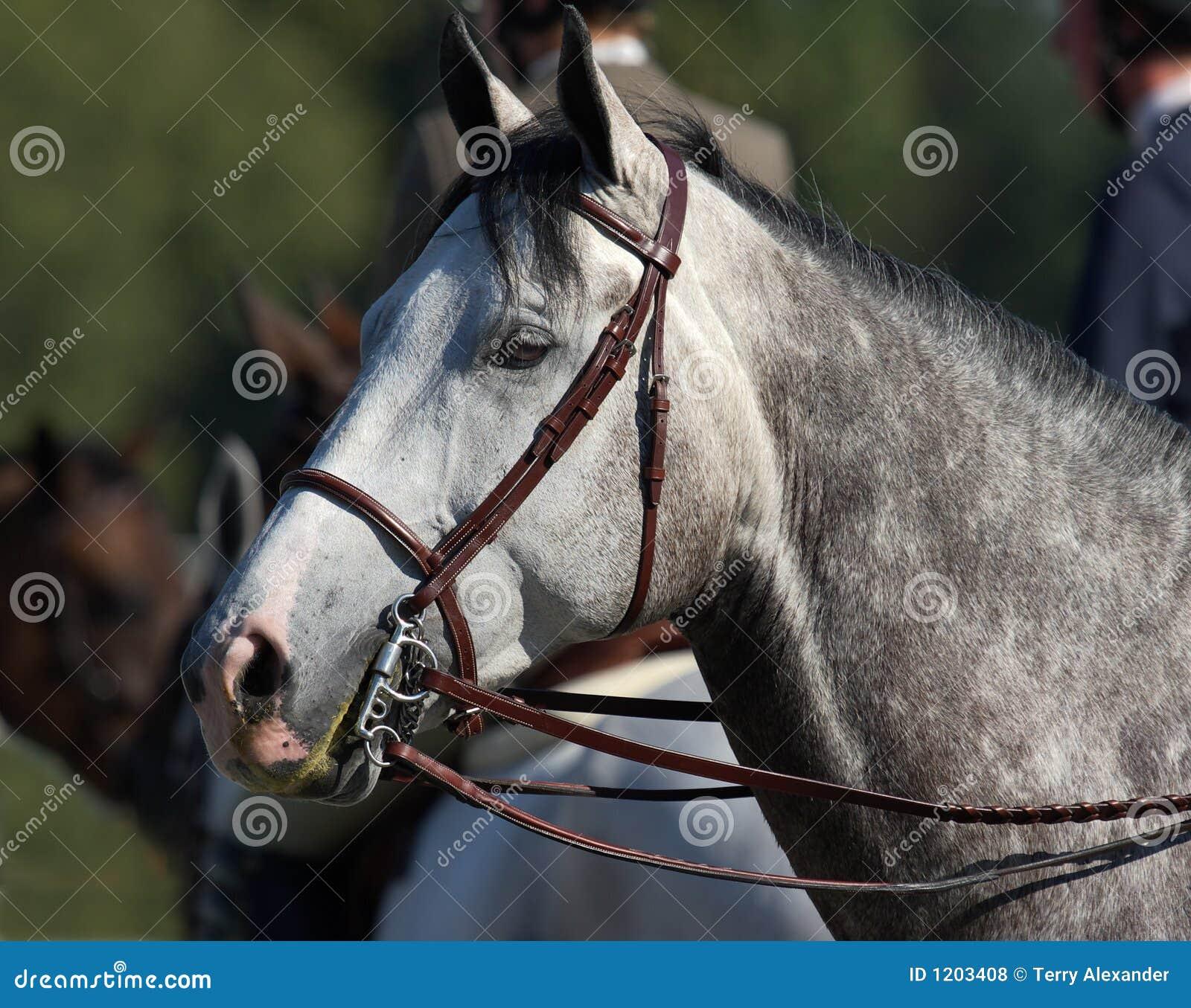 Pferdenportrait