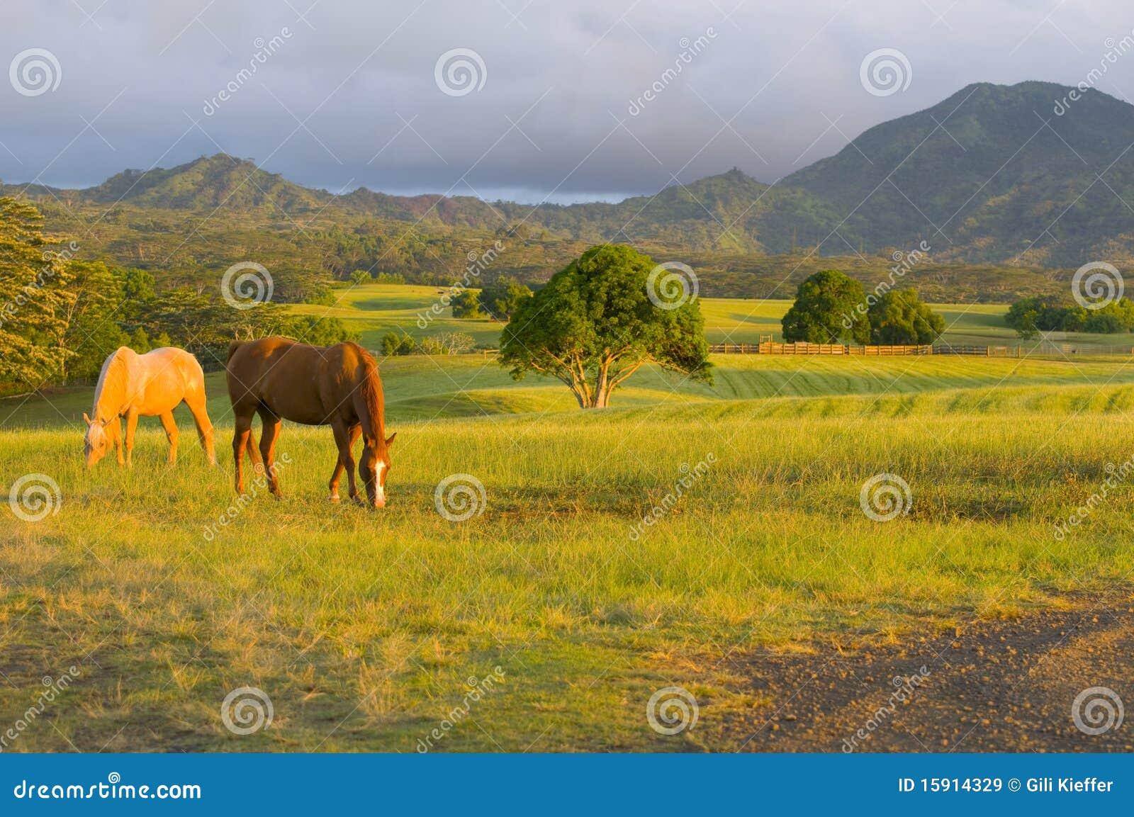Pferdenspeicherung