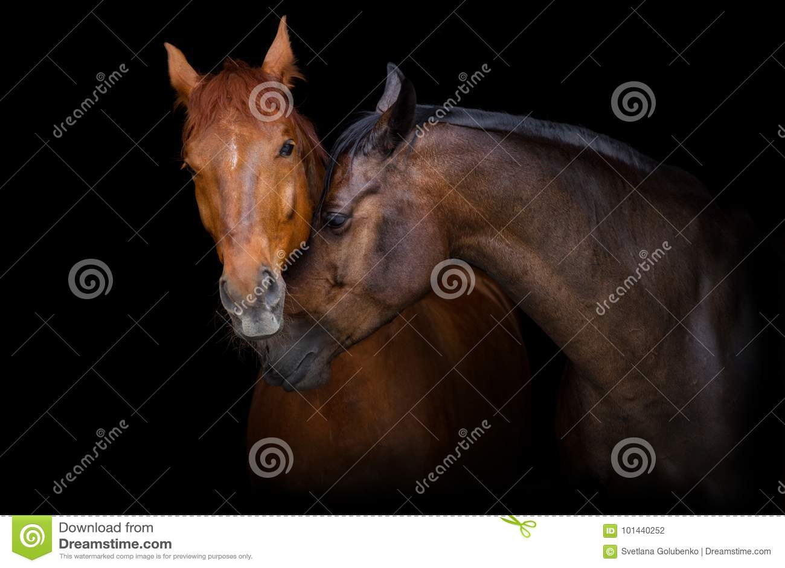 Pferdeportrait zwei