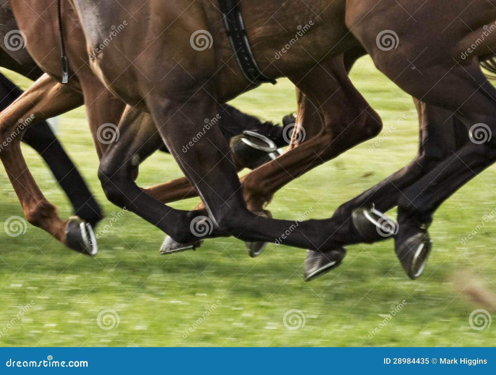 Pferderennen Wette