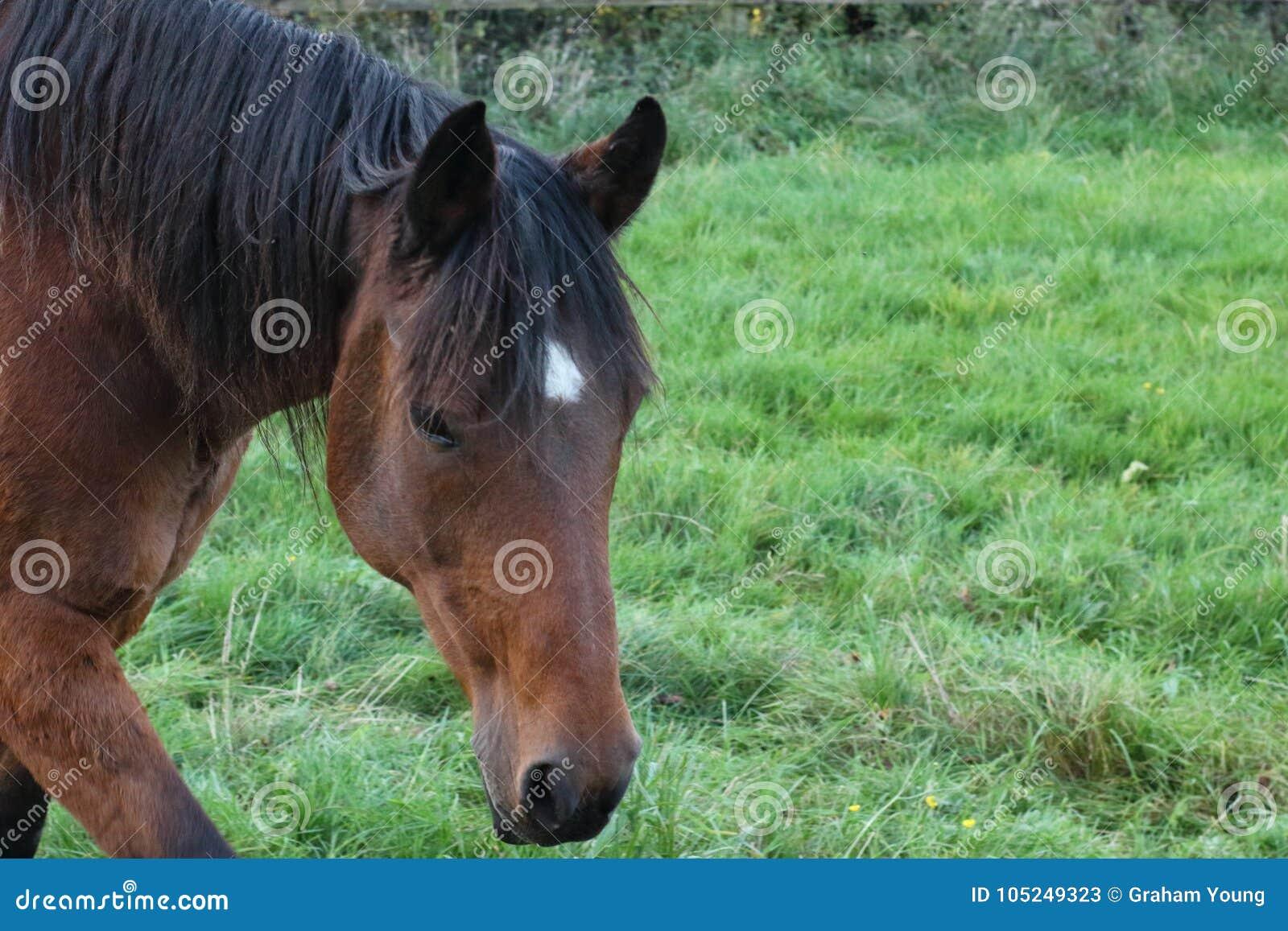 Pferdesuffolk-Herbst