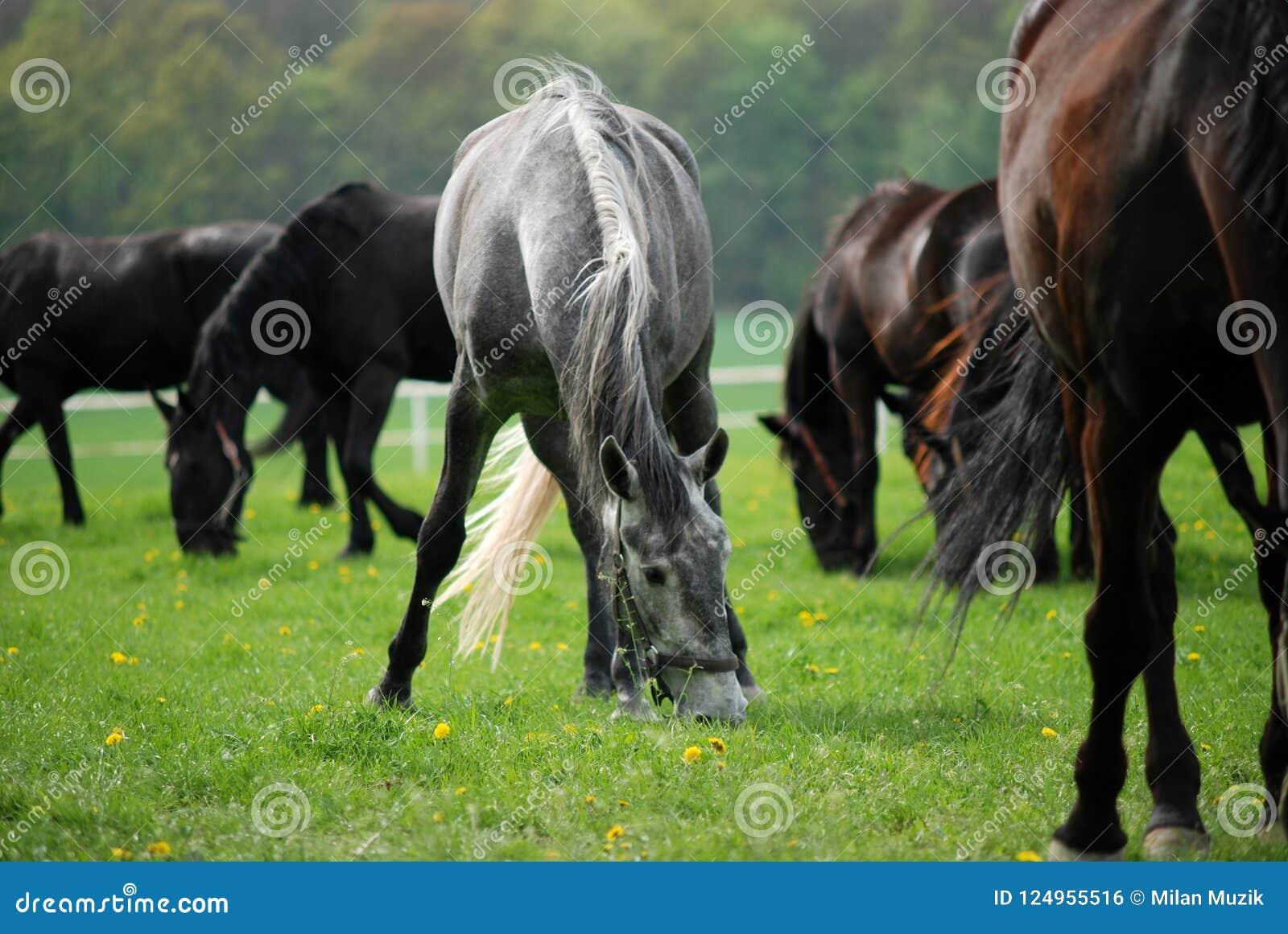 Pferdeweide im Frühjahr weiden lassen