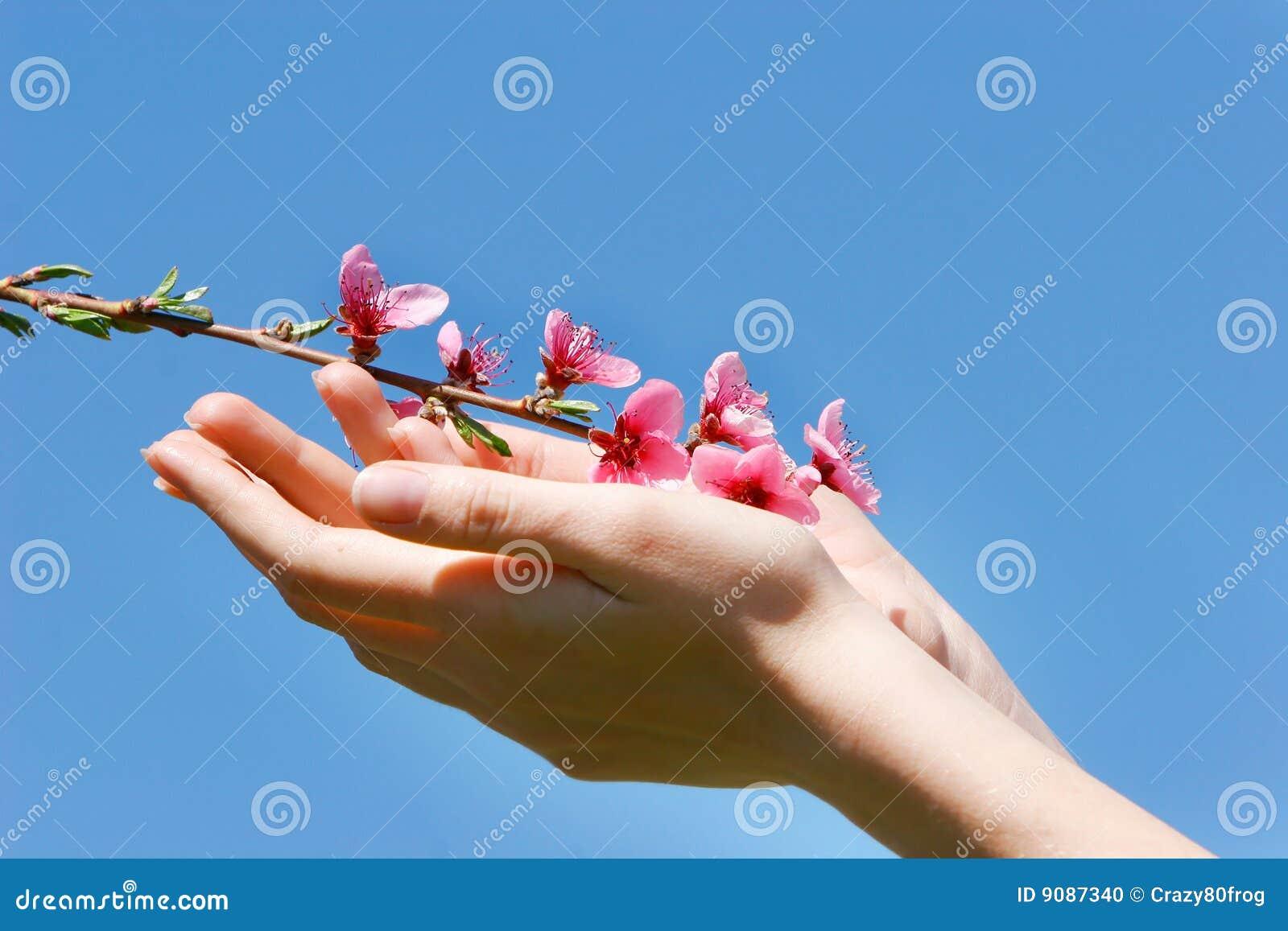 Pfirsichblumen in den Händen