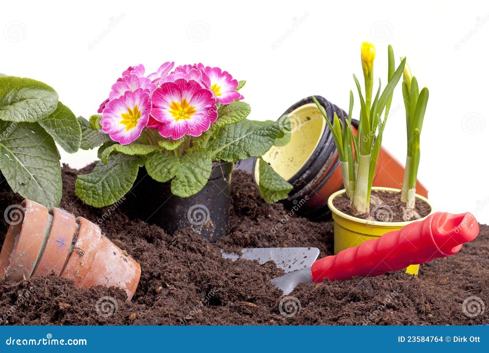 pflanzen der frühlingsblumen stockfoto - bild von mischung