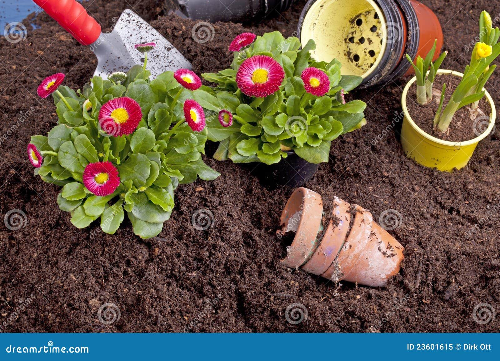pflanzen der frühlingsblumen stockbild - bild von betrieb