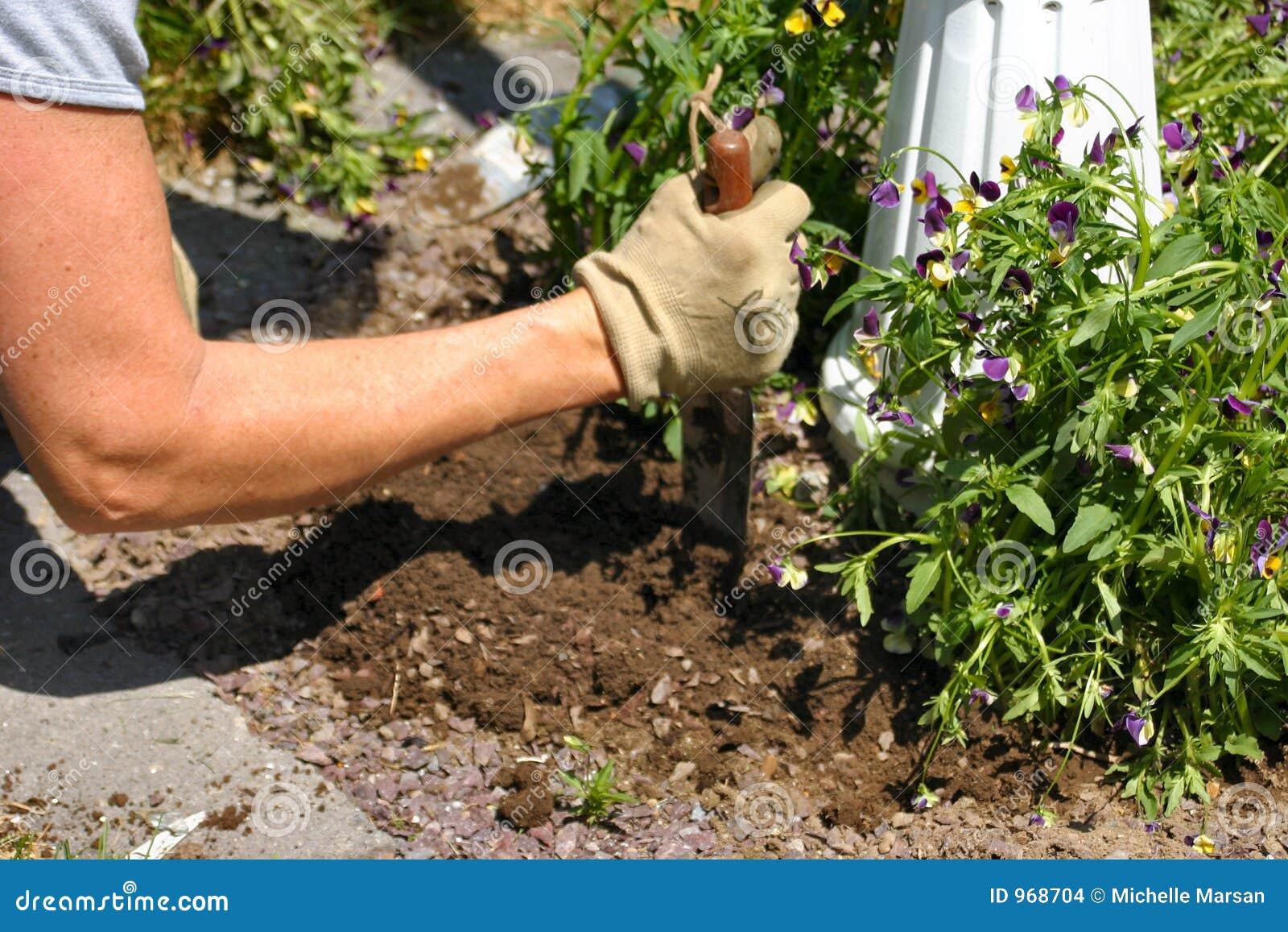 pflanzen der frühlingsblumen stockfoto - bild von petunie