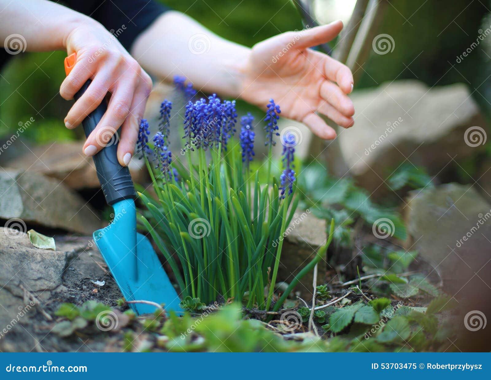 pflanzen von blumen, frühlingsgartenarbeit stockbild - bild von