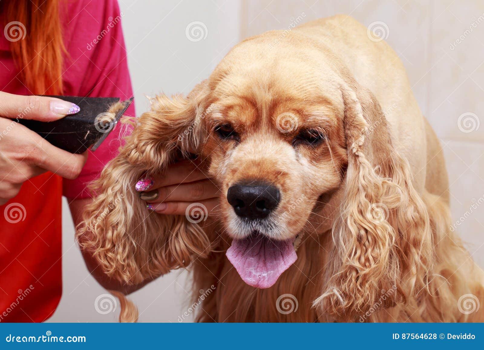 Pflegen des Haares des Hundes