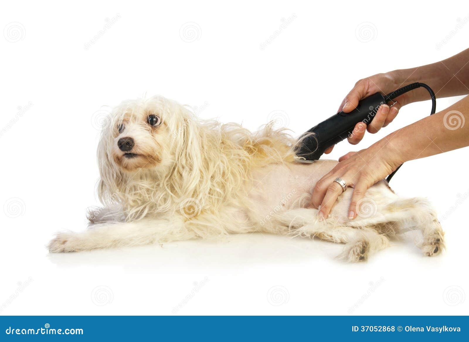 Pflegen des Hundes