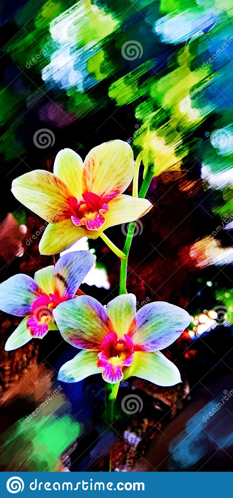 Phalaenopsis da orquídea