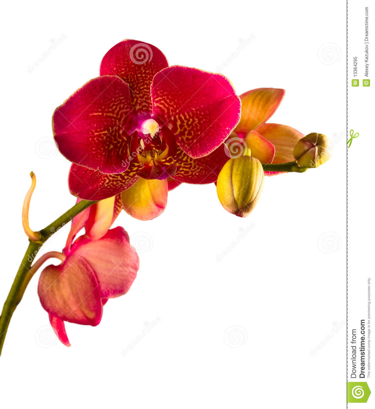 orchidee blanche et orange