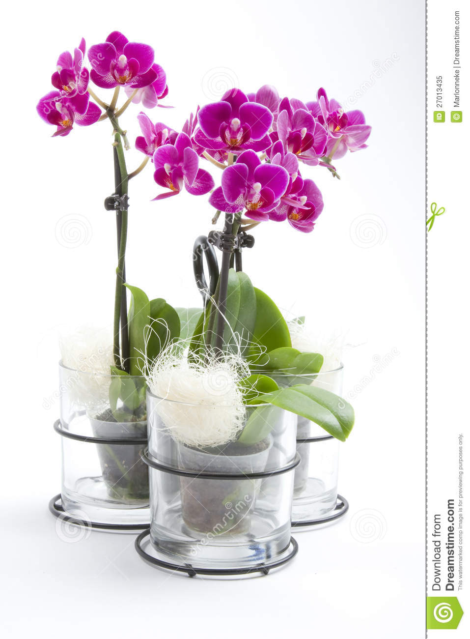 phalaenopsis orchid in flower pot stock image image of container white 27013435. Black Bedroom Furniture Sets. Home Design Ideas