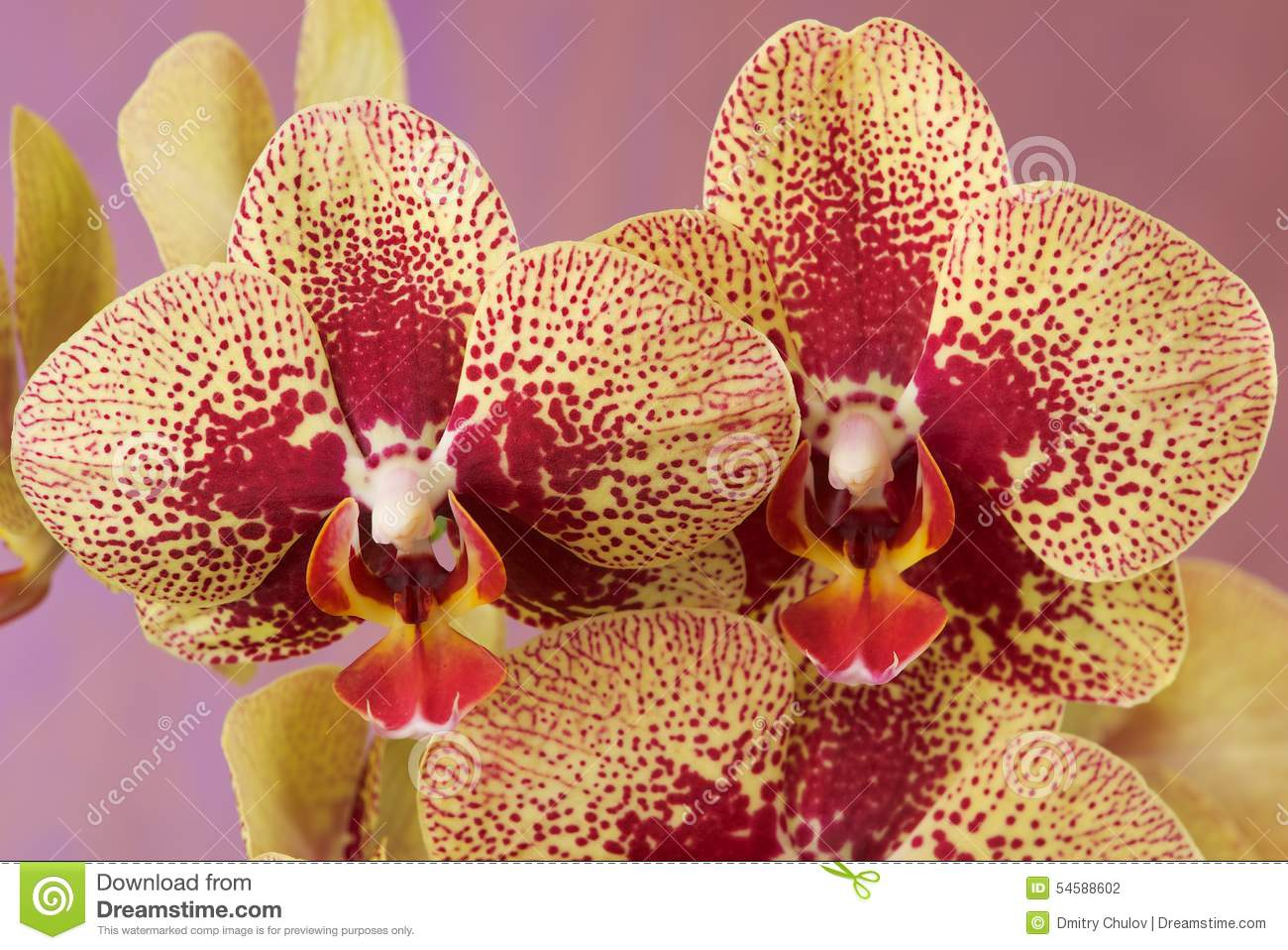 Orchid – The It' Color For Spring pics
