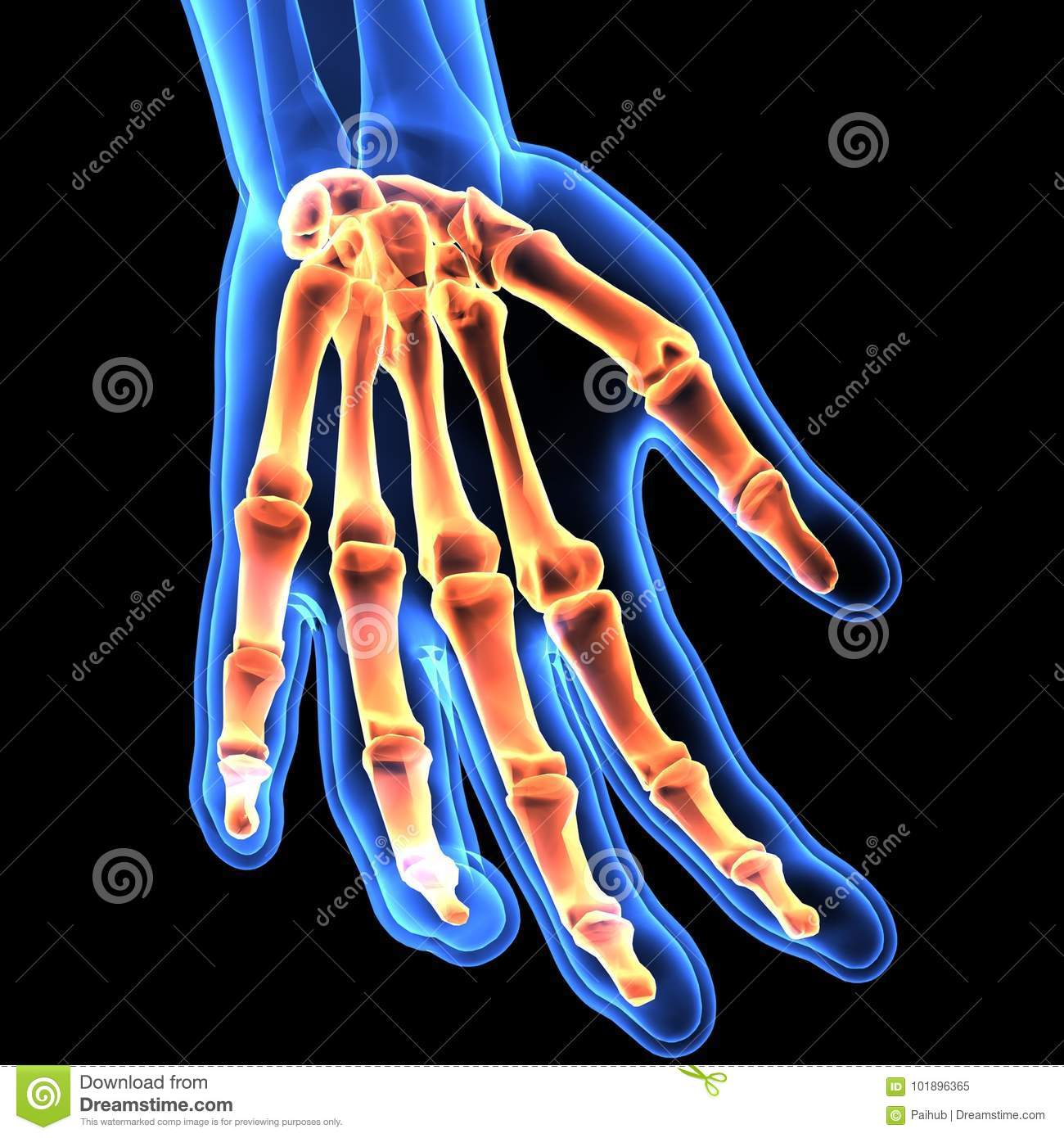 3d Illustration Of Hand Skeleton Part Of Human Skeleton Stock
