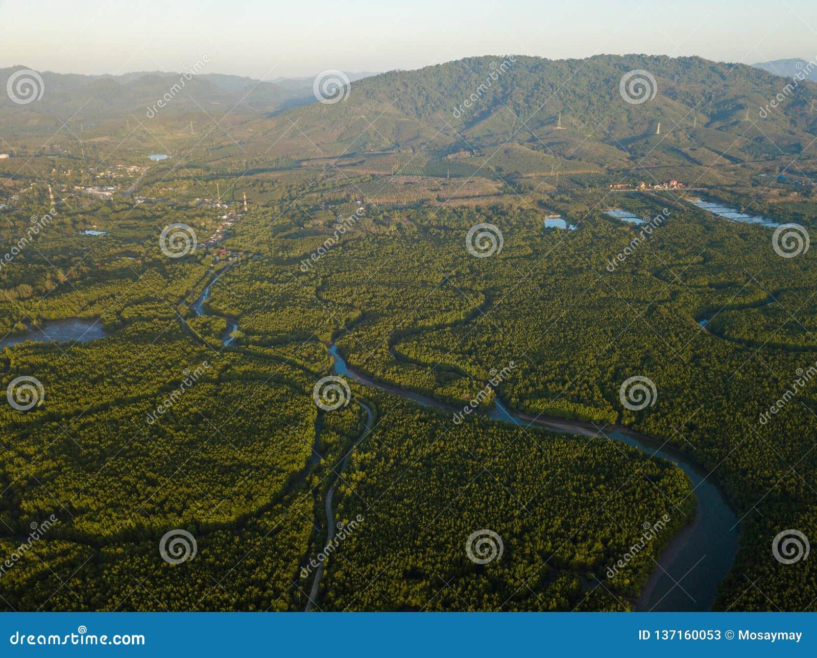 Phang Nga省的大美洲红树森林