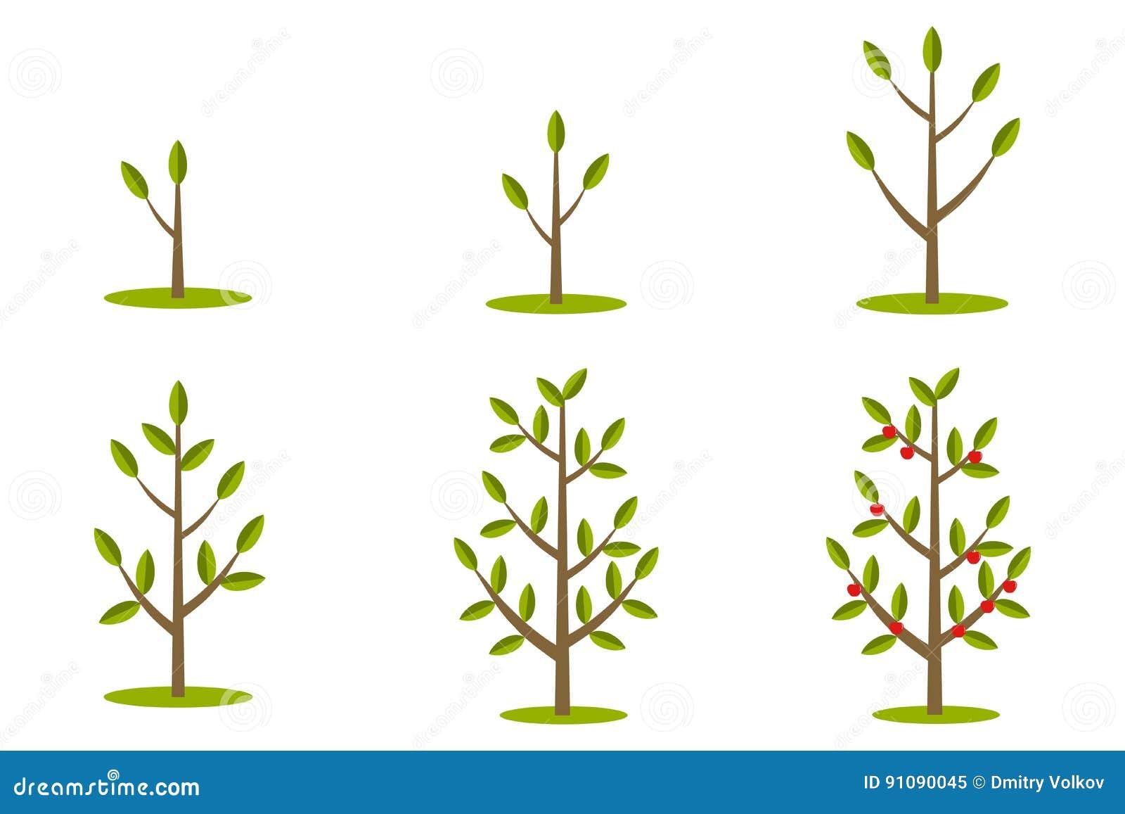 phases de croissance d 39 arbre illustration stock illustration du cycle plat 91090045. Black Bedroom Furniture Sets. Home Design Ideas