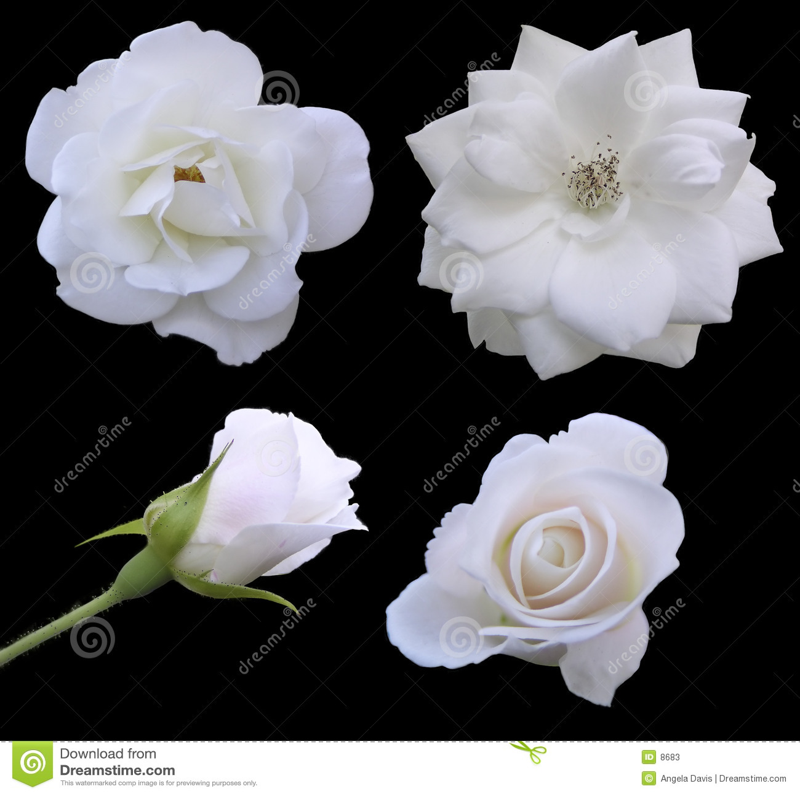 Phases de Rose