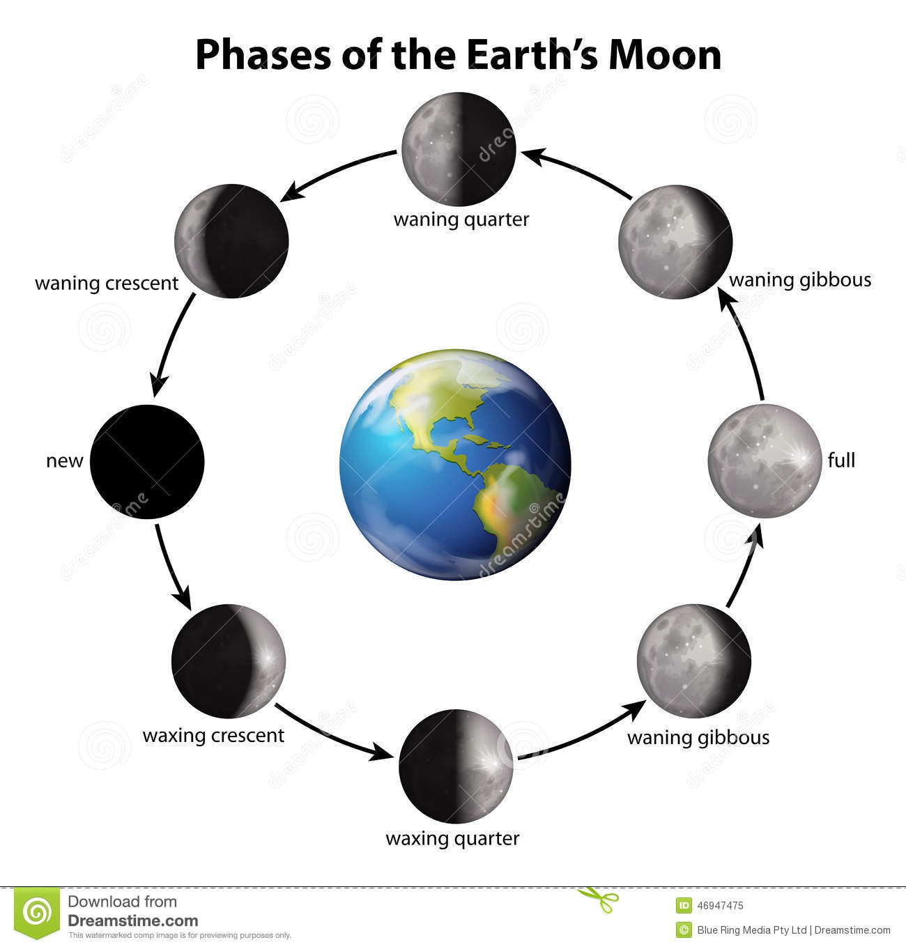 Phases of the earths moon stock vector illustration of dense phases of the earth s moon pooptronica Choice Image