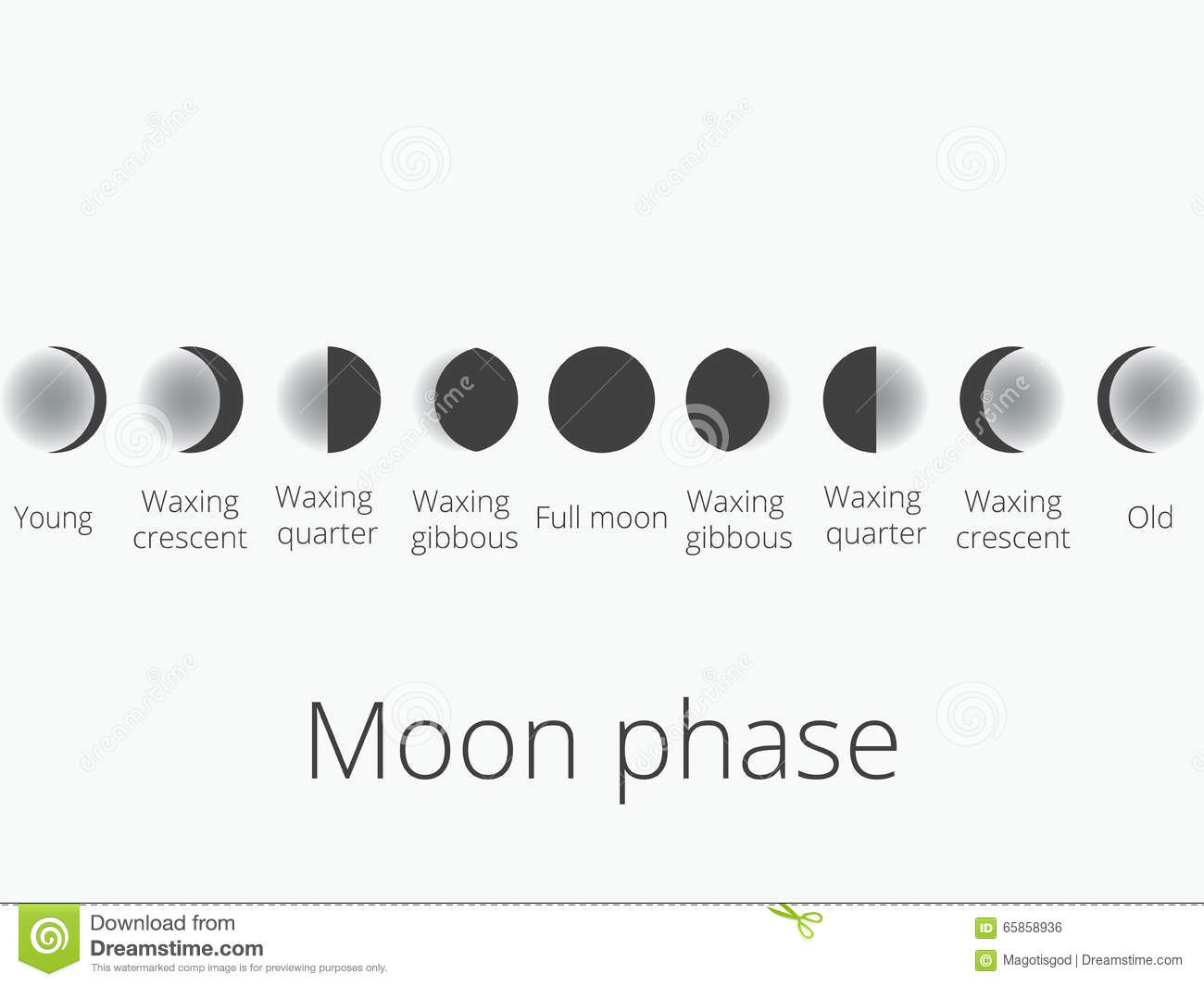 The phases of the moon the whole cycle from new moon to full v the phases of the moon the whole cycle from new moon to full v pooptronica Gallery