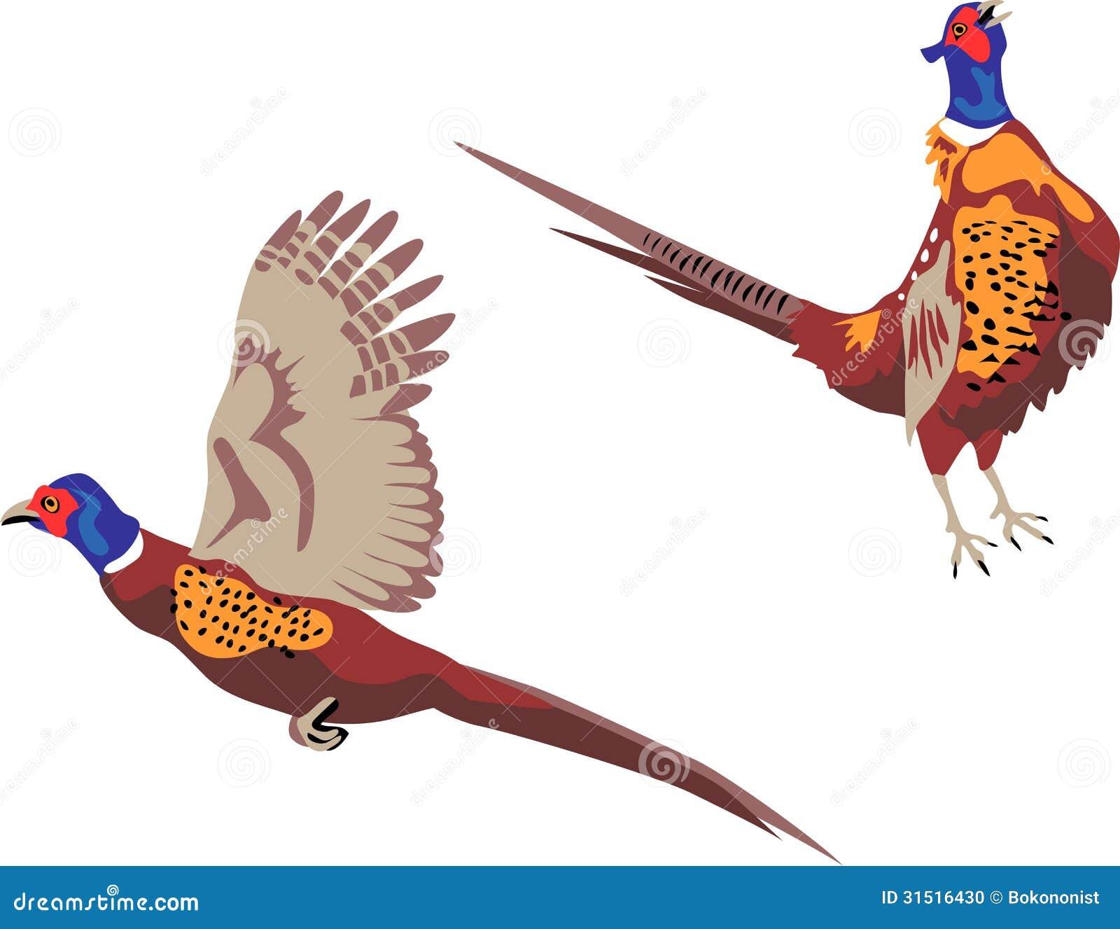 Pheasant Stock Illustrations  1197 Pheasant Stock