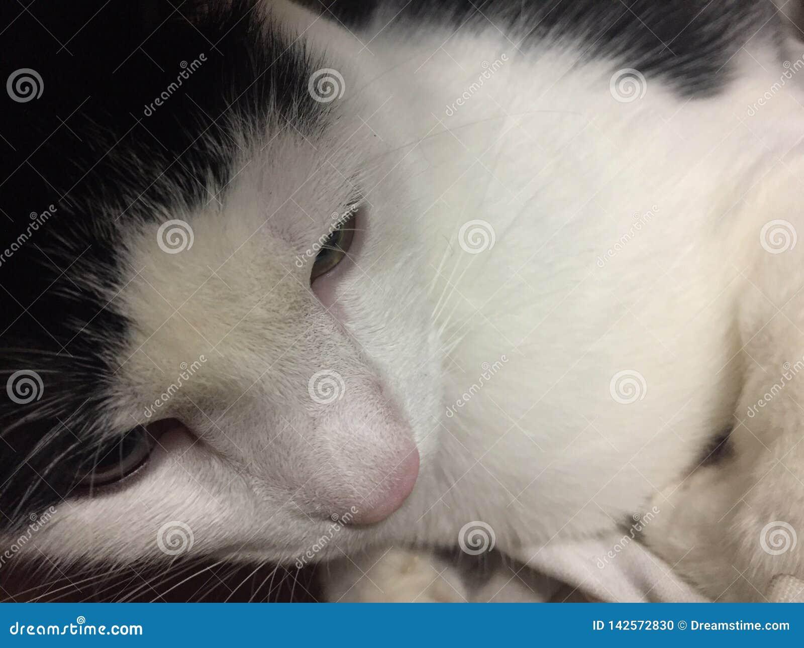 Phi de Kitty