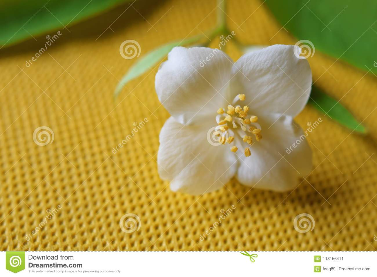Philadelphus With One Flower Stock Image Image Of Green Blurred